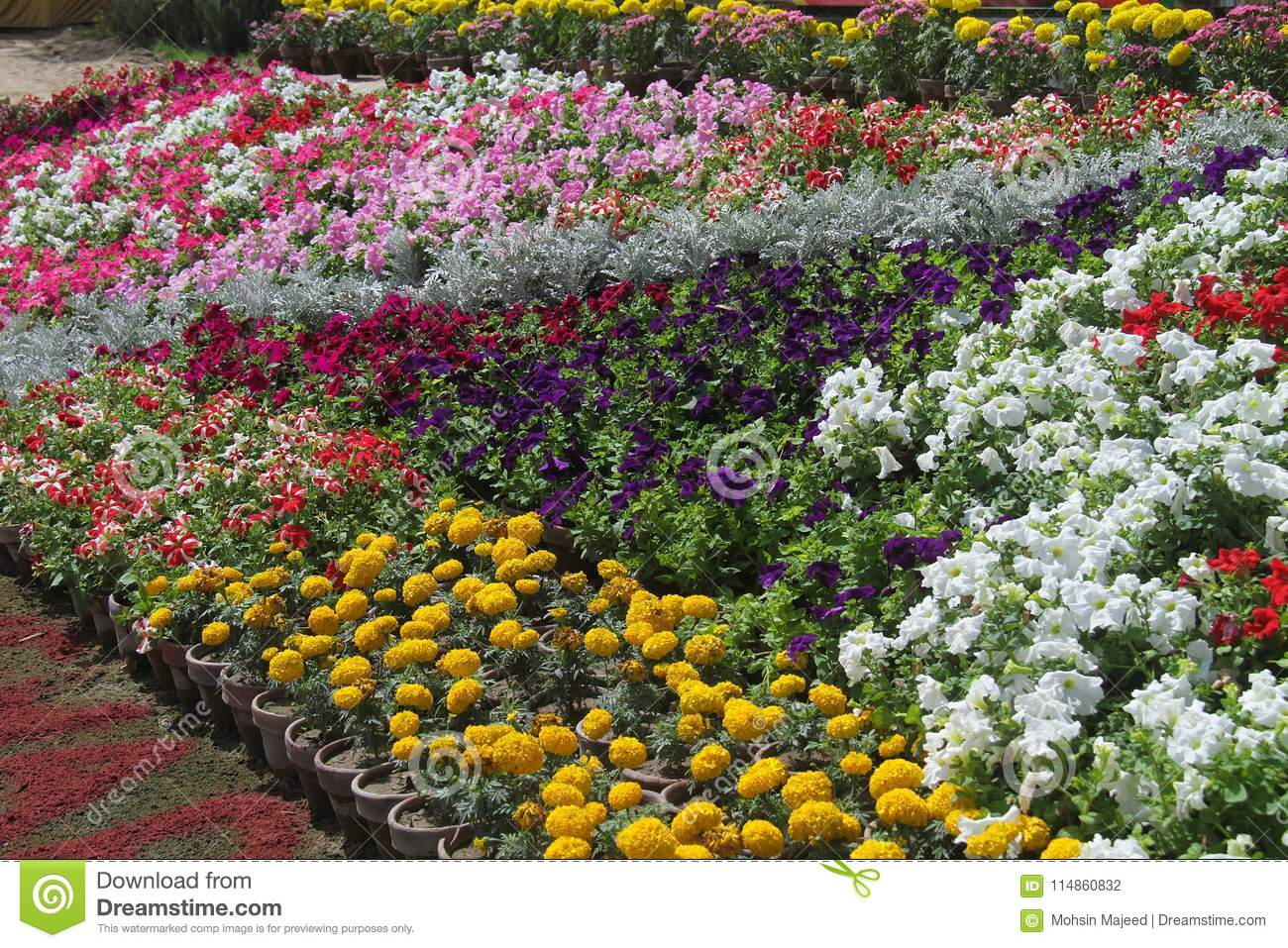 Flowers For Background Beautiful Stock Photo Image Of Crape