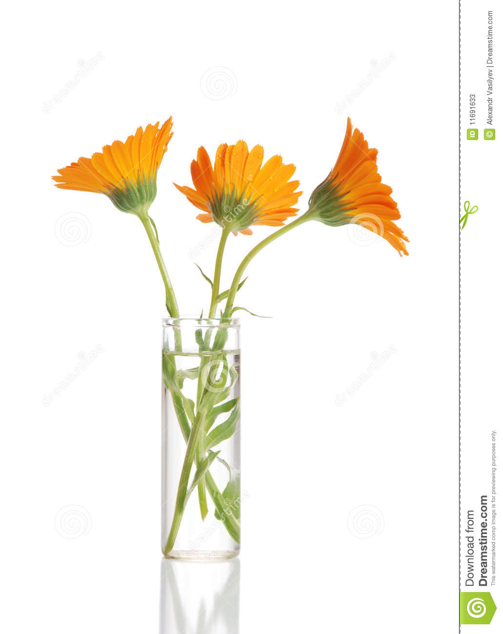Flower in a vase stock image image of orange glass 11691633 flower in a vase orange glass reviewsmspy