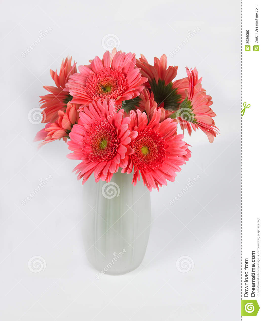 Flower Vase With Pink Daisy Flowers Stock Photo Image Of Origin