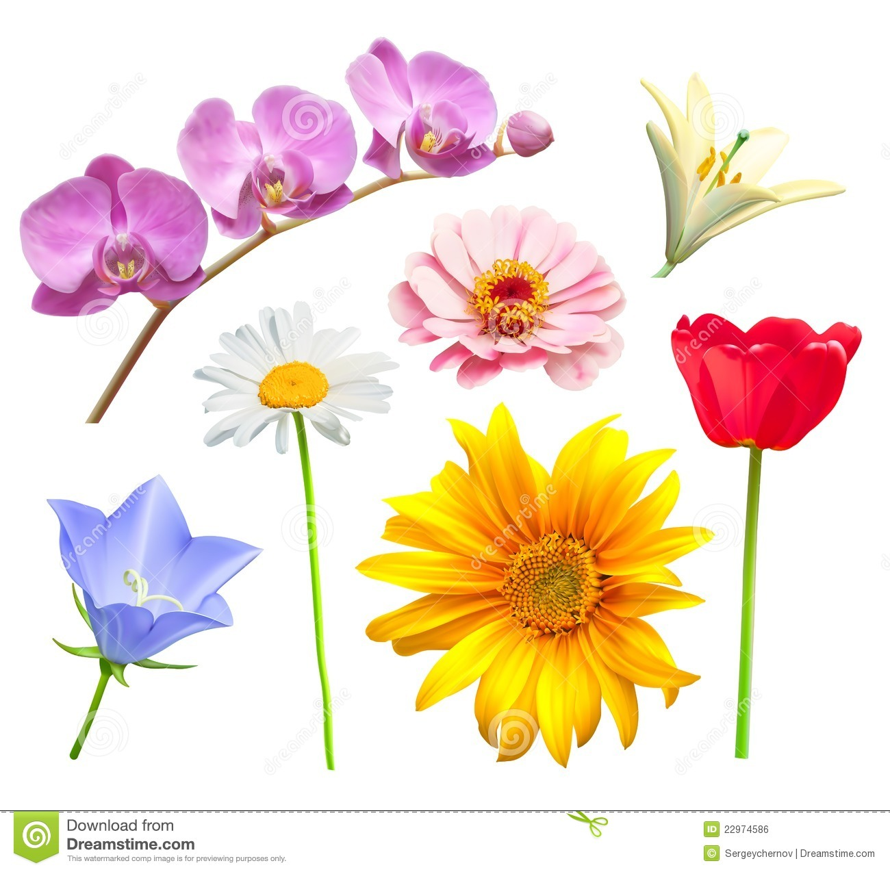 Flower vector set. Orchid, tulip, chamomile, lily, bluebell and daisy.