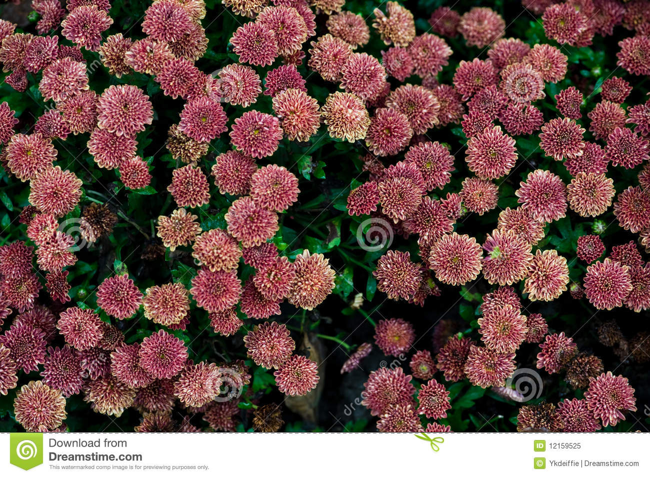 Flower Wall Royalty Free Stock Image