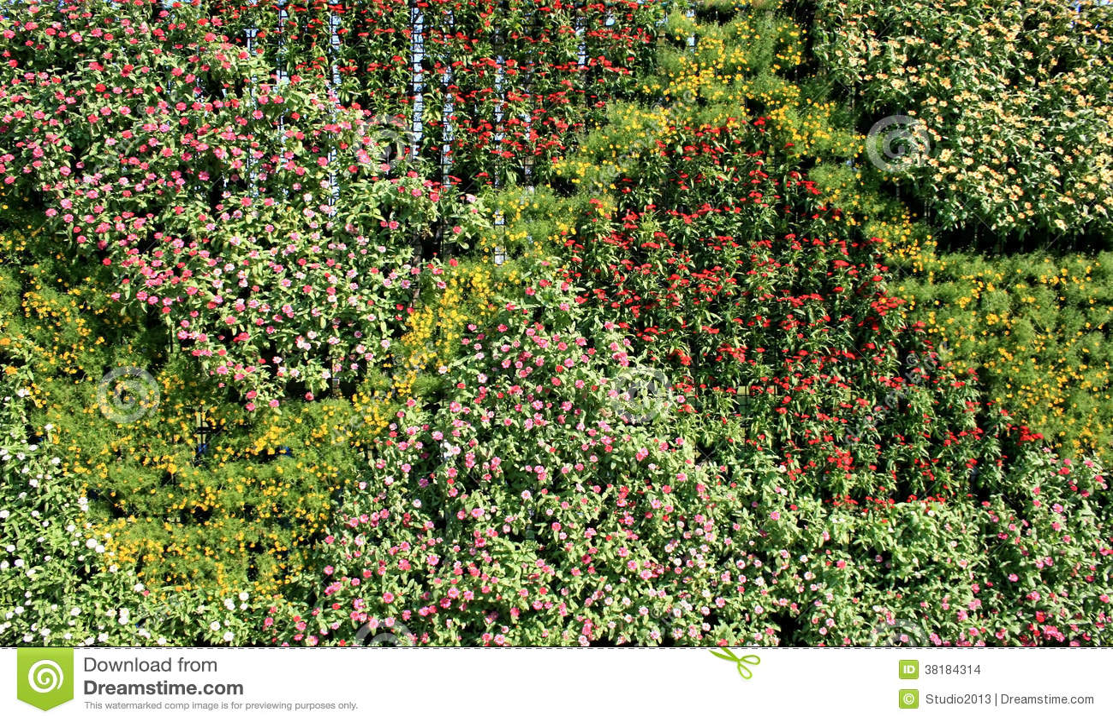 Flower wall vertical garden stock photo image of for Flower wall garden
