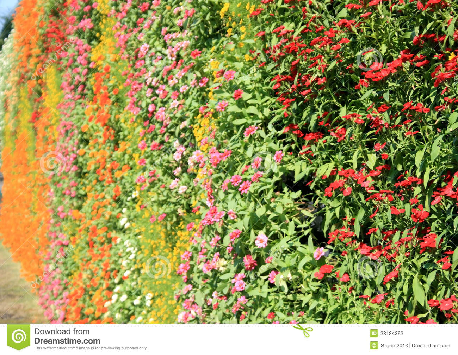 Flower wall vertical garden stock photos image 38184363 for Flower wall garden