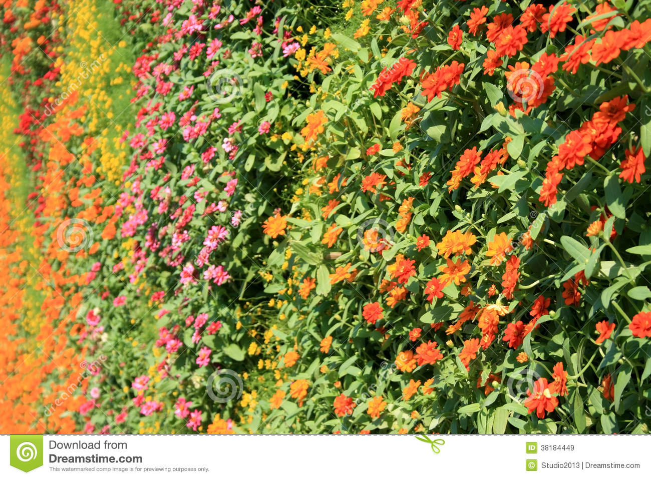 Download Flower Wall Vertical Garden Stock Image   Image Of Vertical,  Plant: 38184449