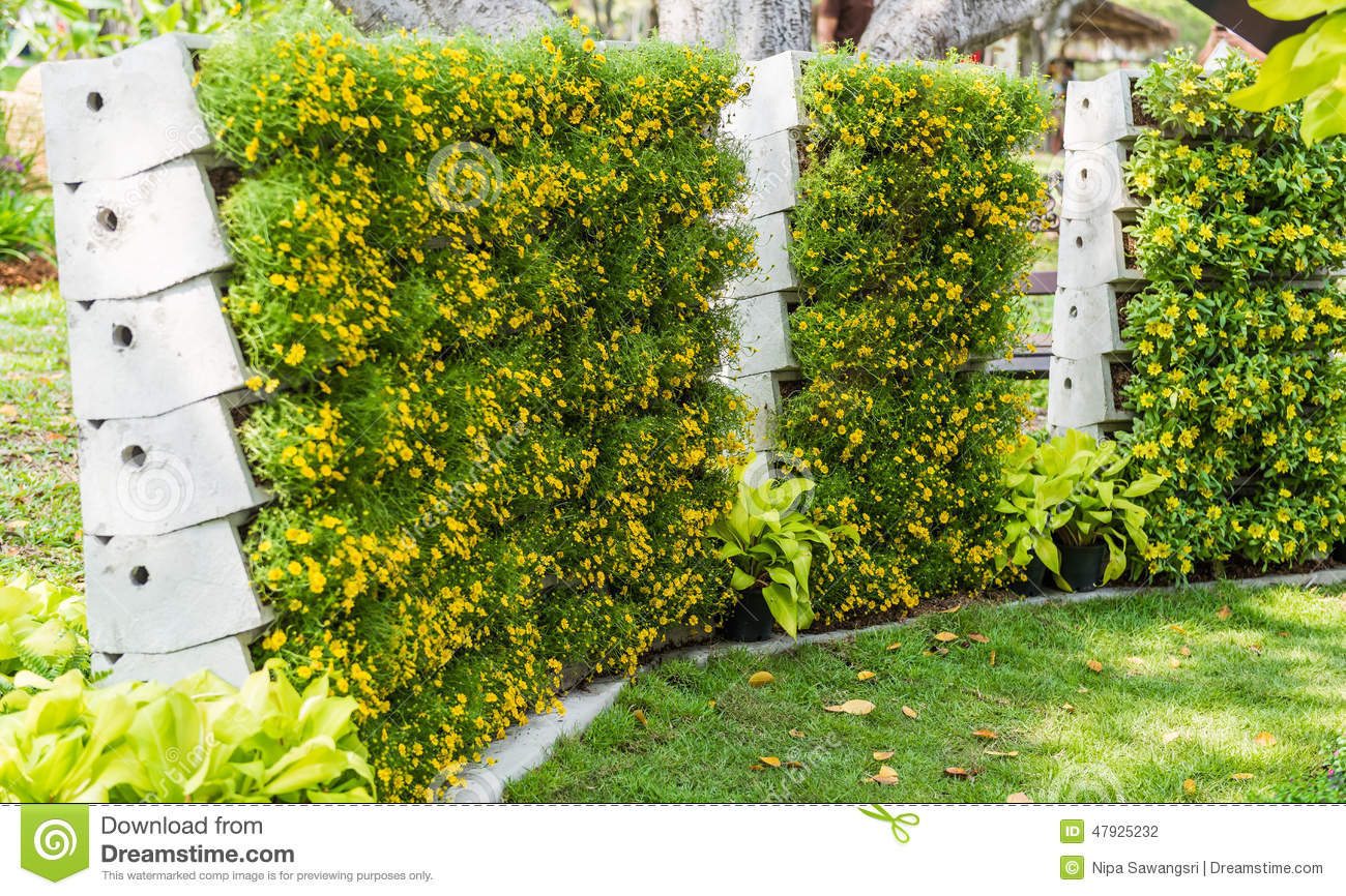 Flower Wall Vertical Garden Stock Photo Image 47925232