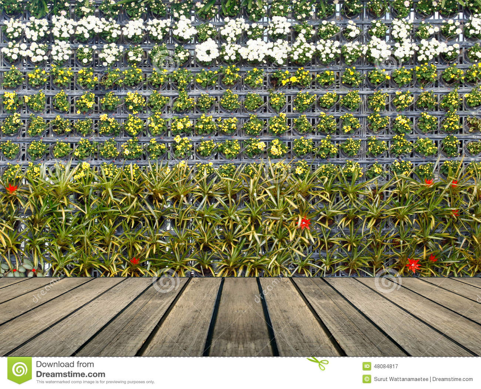Flower Wall Vertical Garden Stock Photo Image 48084817