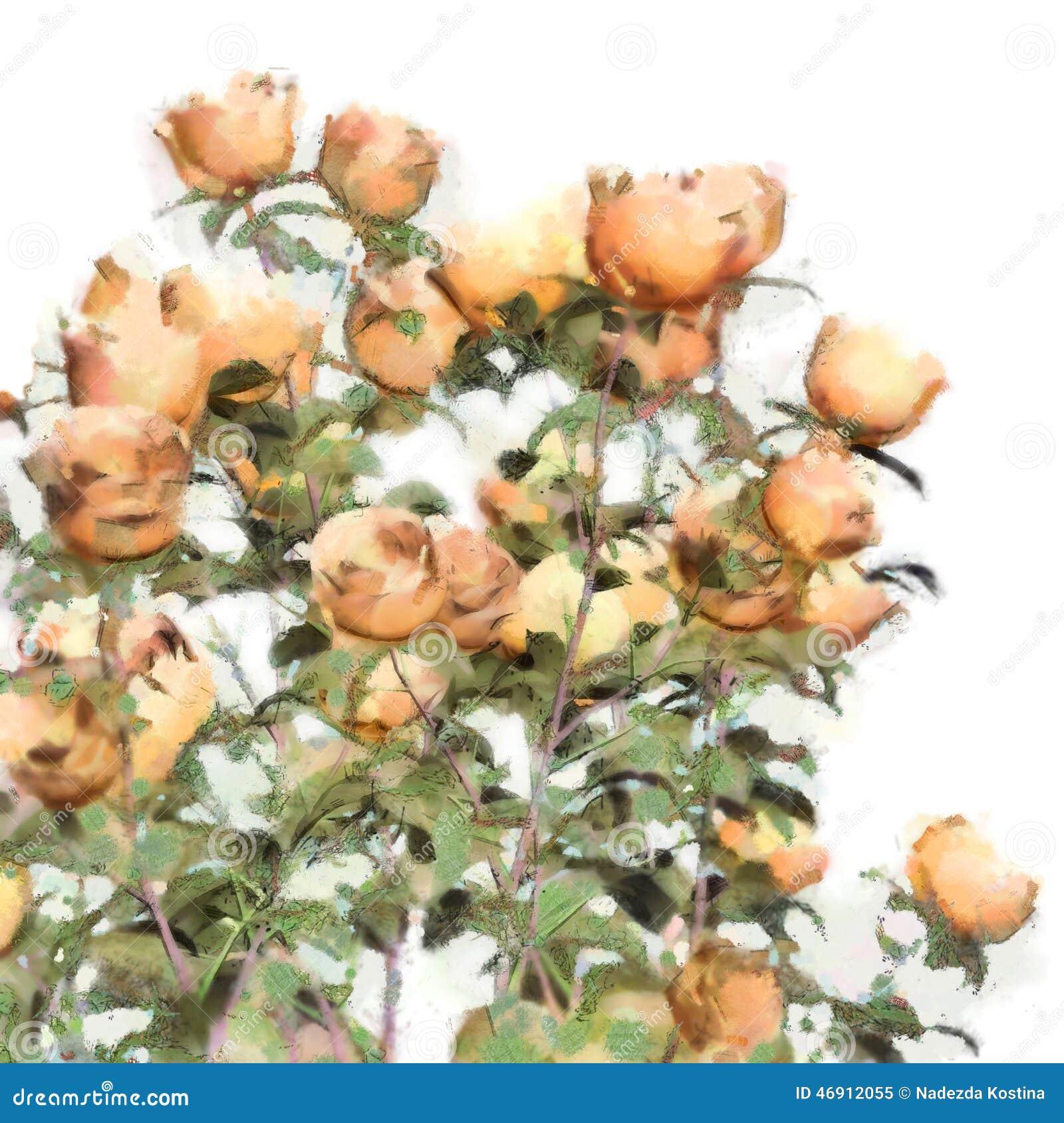 flower watercolor roses bush stock illustration illustration of