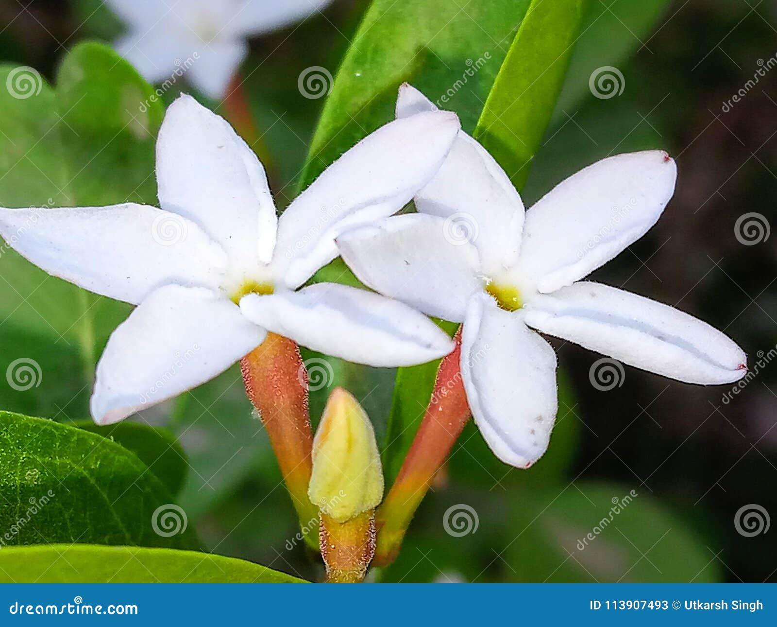 Flower Stock Image Image Of Photoshoot Whiteflower 113907493