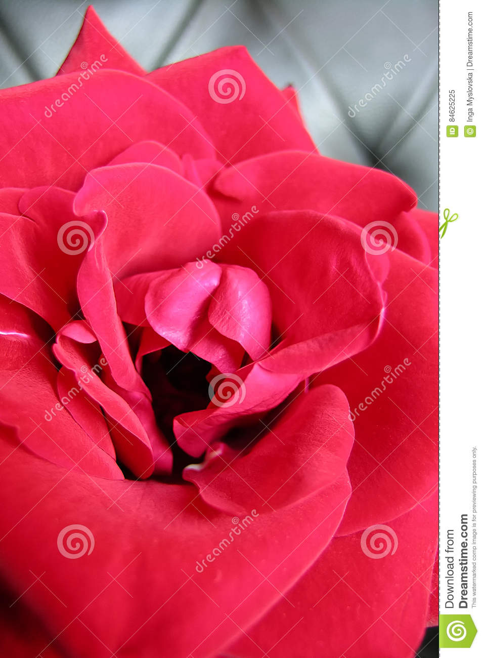 A flower and woman vagina