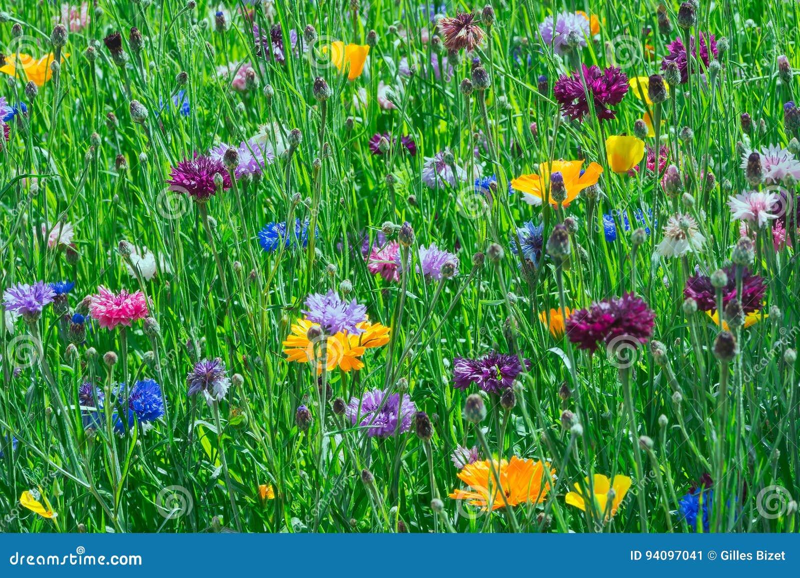 Flowerbed от июня