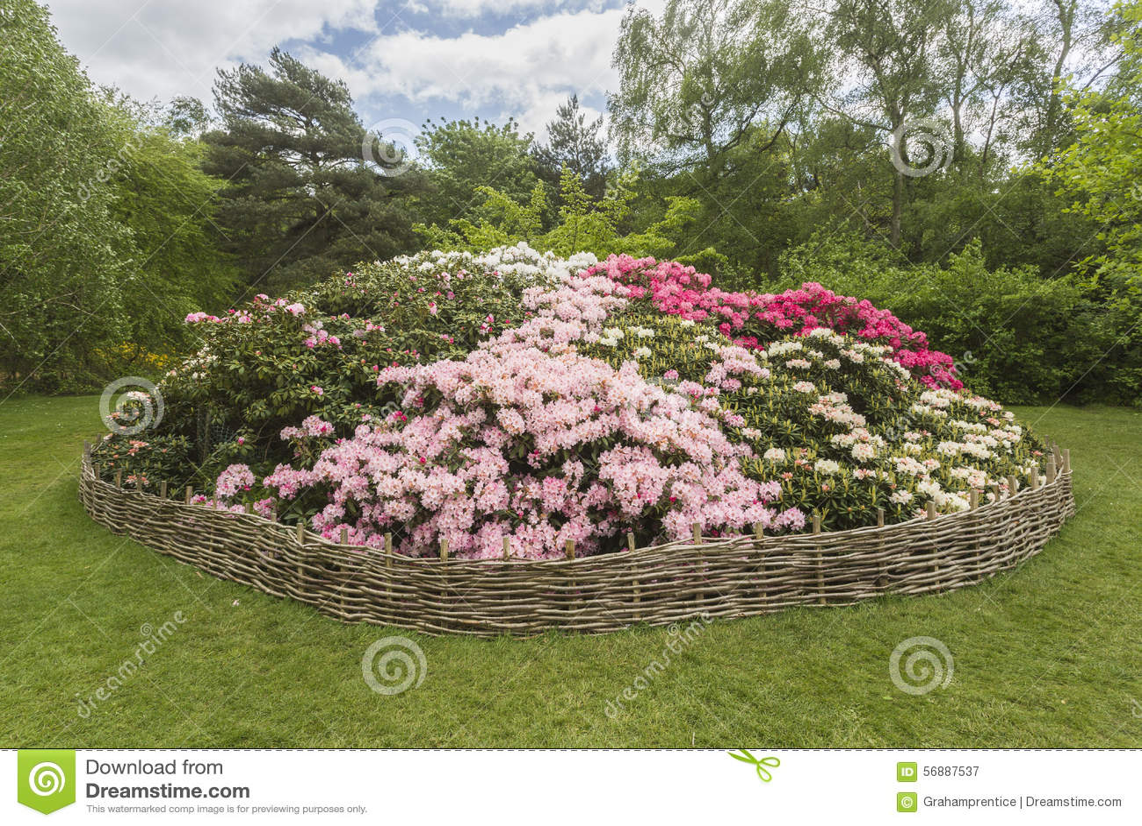 Flowerbed рододендрона, плантация Isabella, парк Ричмонда