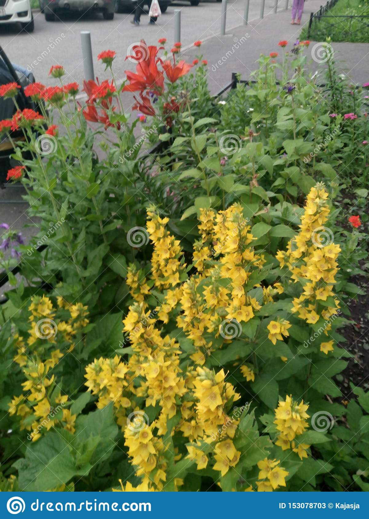 Flowerbed with Yellow red and other flowers