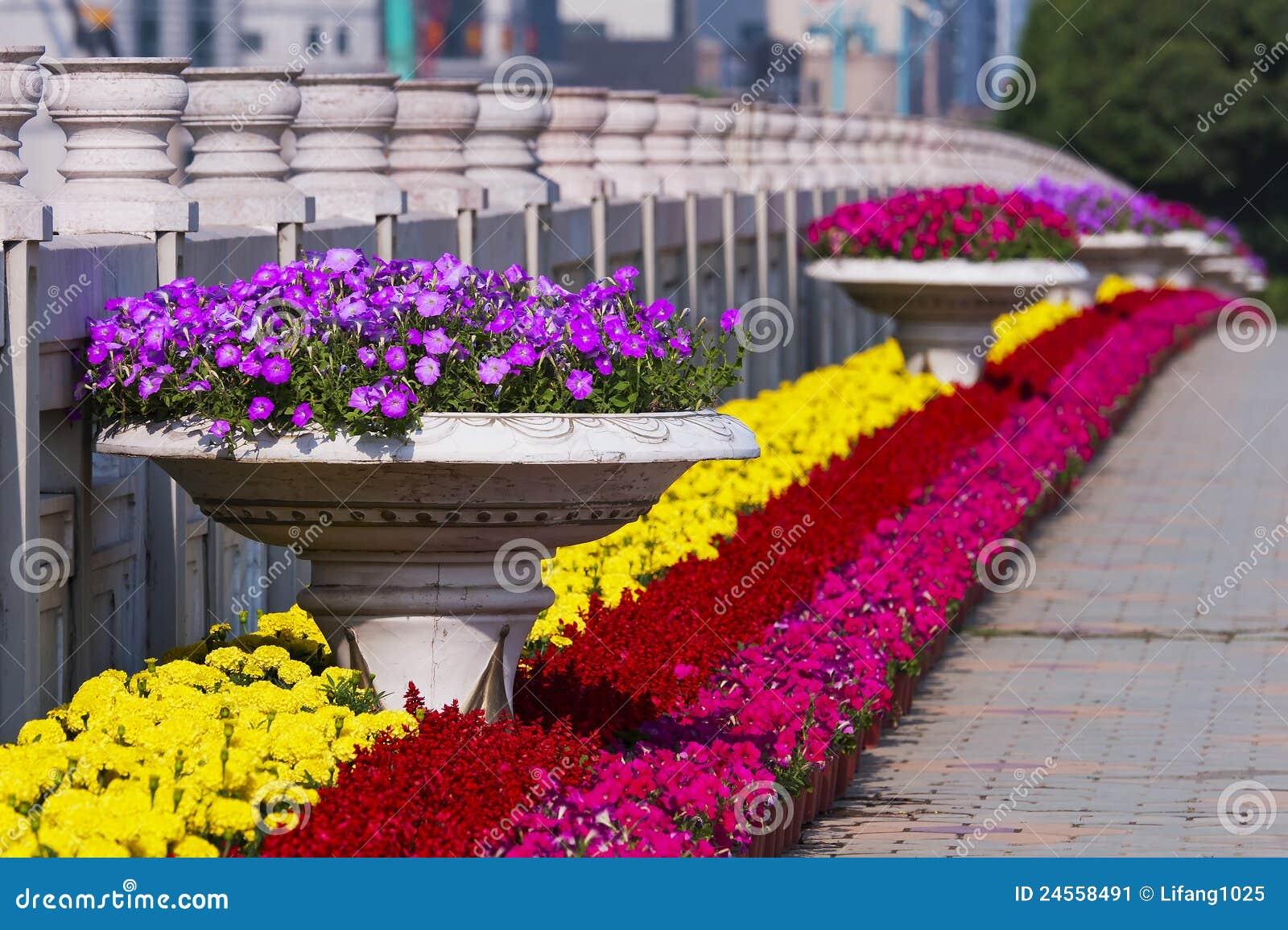 flowerbeds stock image image of chrysanthemum landscaping 24558491. Black Bedroom Furniture Sets. Home Design Ideas