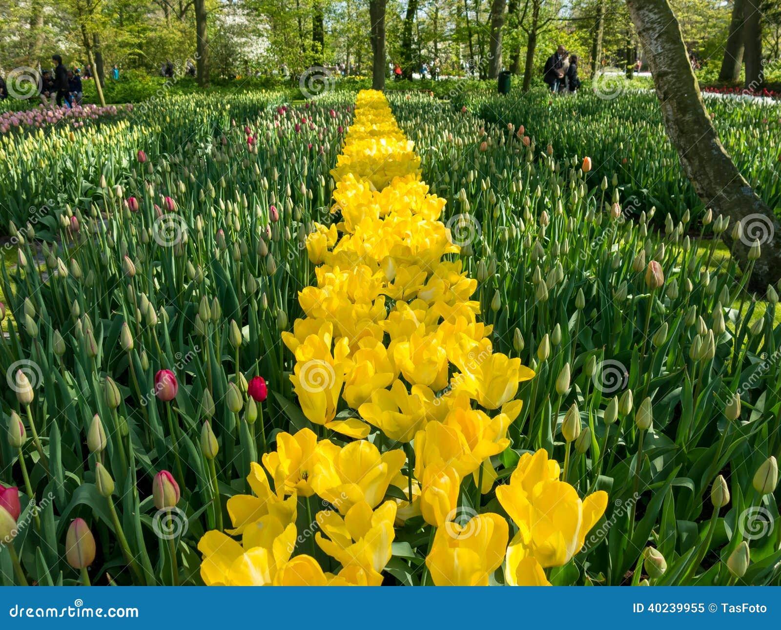 Flowering bulbs in keukenhof gardens holland editorial for Bulb garden designs