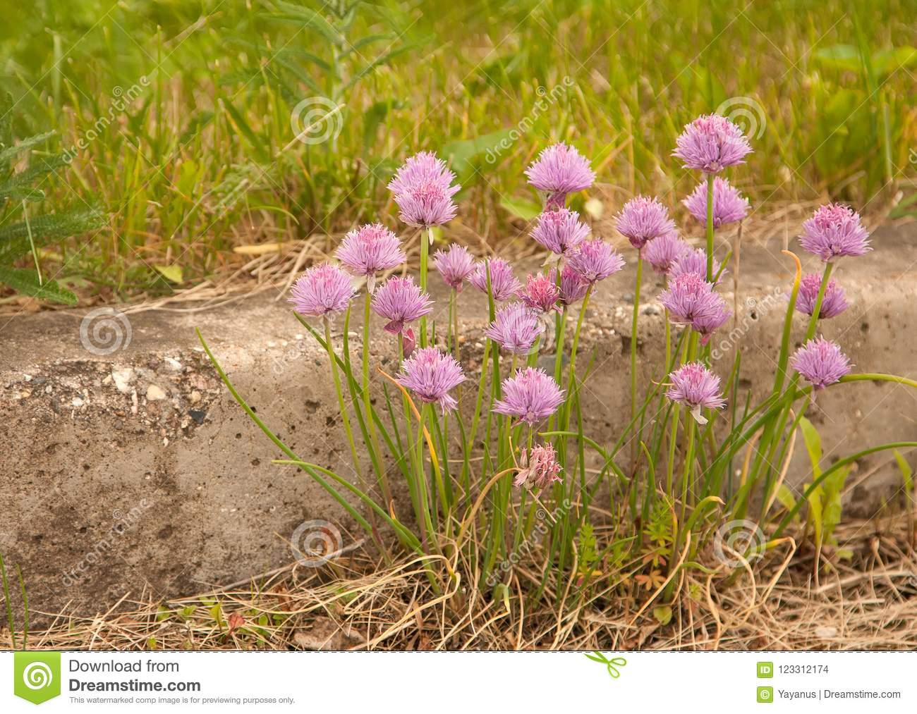 Flowering Clover. Summer Day. Wildflowers. Stock Photo - Image of ...