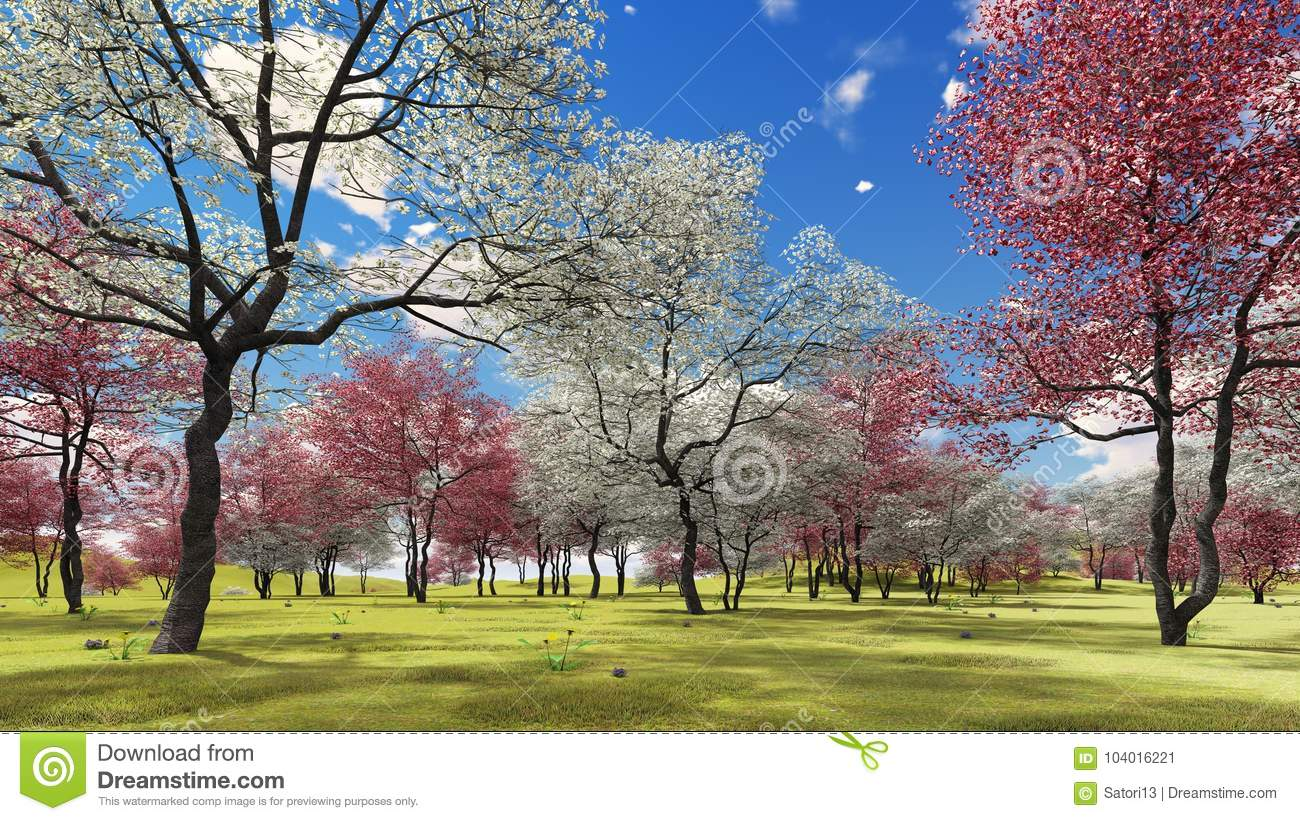 Flowering Dogwood Trees In Orchard In Spring Time 3d