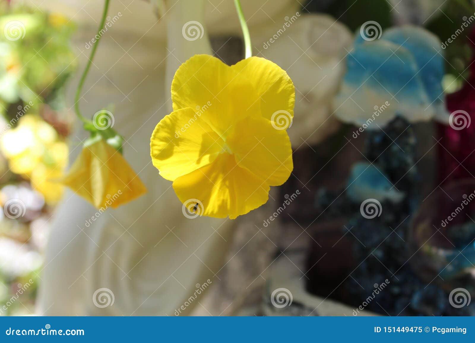 Magnoliophyta yellow