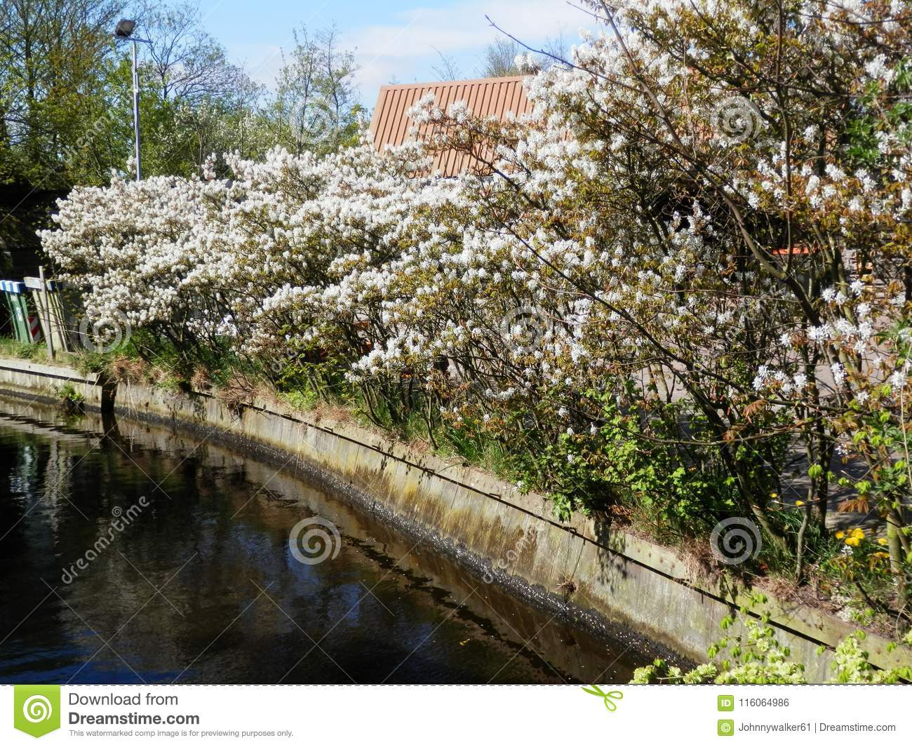 Flowering shrub on canal-side
