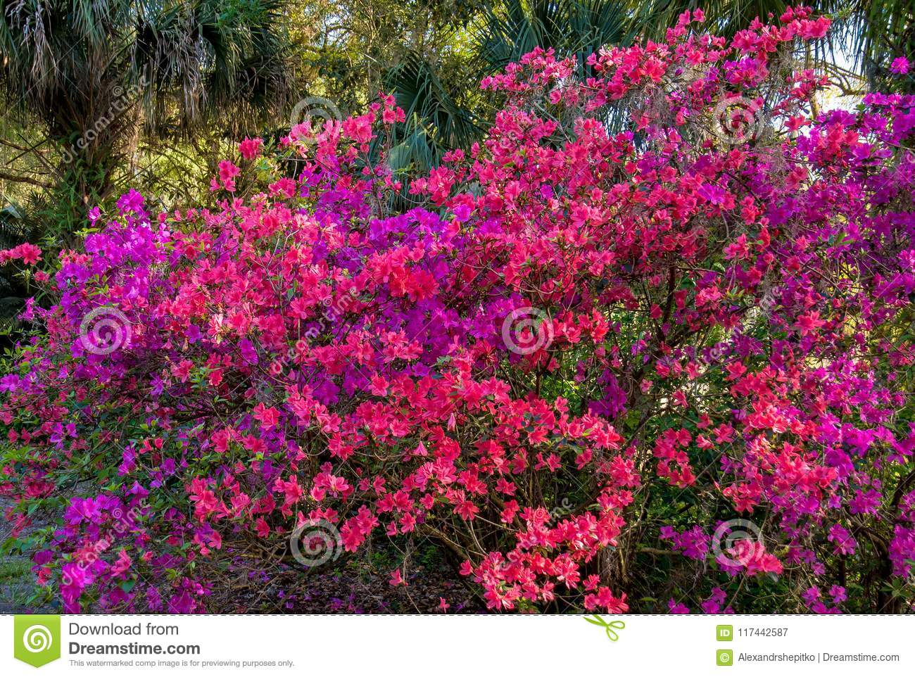 Flowering Shrubs In A Tropical Park Flowering Time Florida