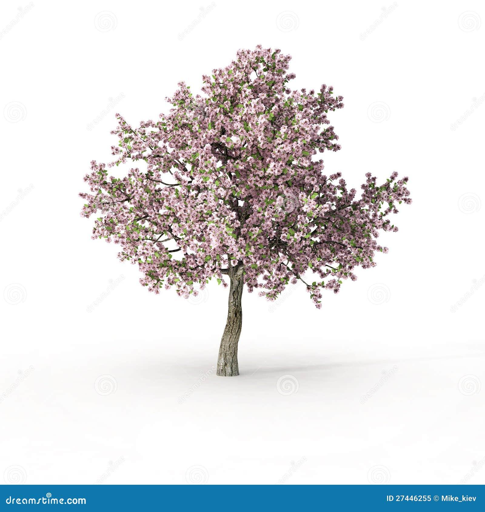 Flowering Tree On White Stock Illustration Illustration Of Growth