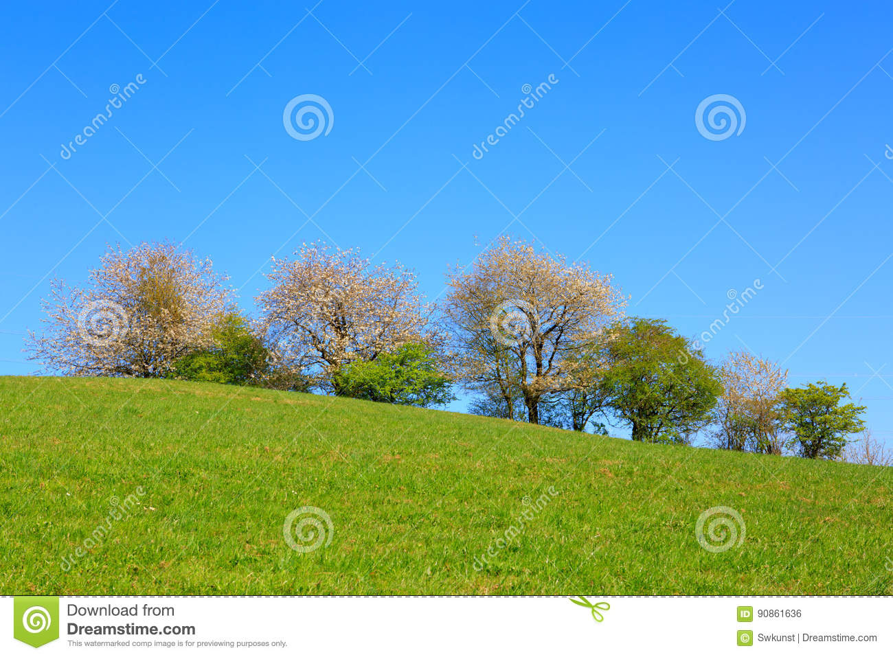 Flowering trees on meadow and blue sky stock photo image of farm download flowering trees on meadow and blue sky stock photo image of farm izmirmasajfo