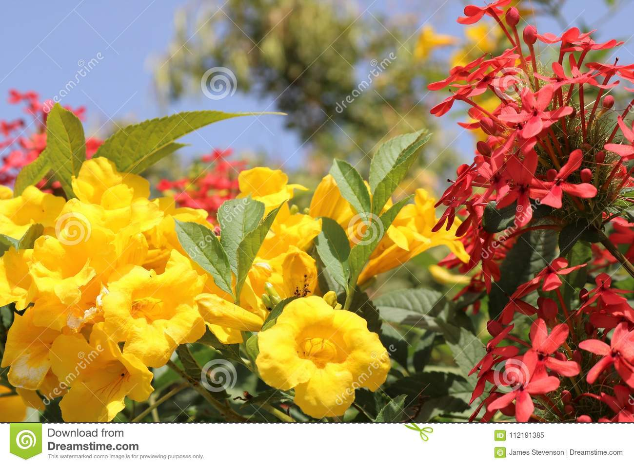 Flowering Yellow And Red Flowers Against The Blue Sky Desert