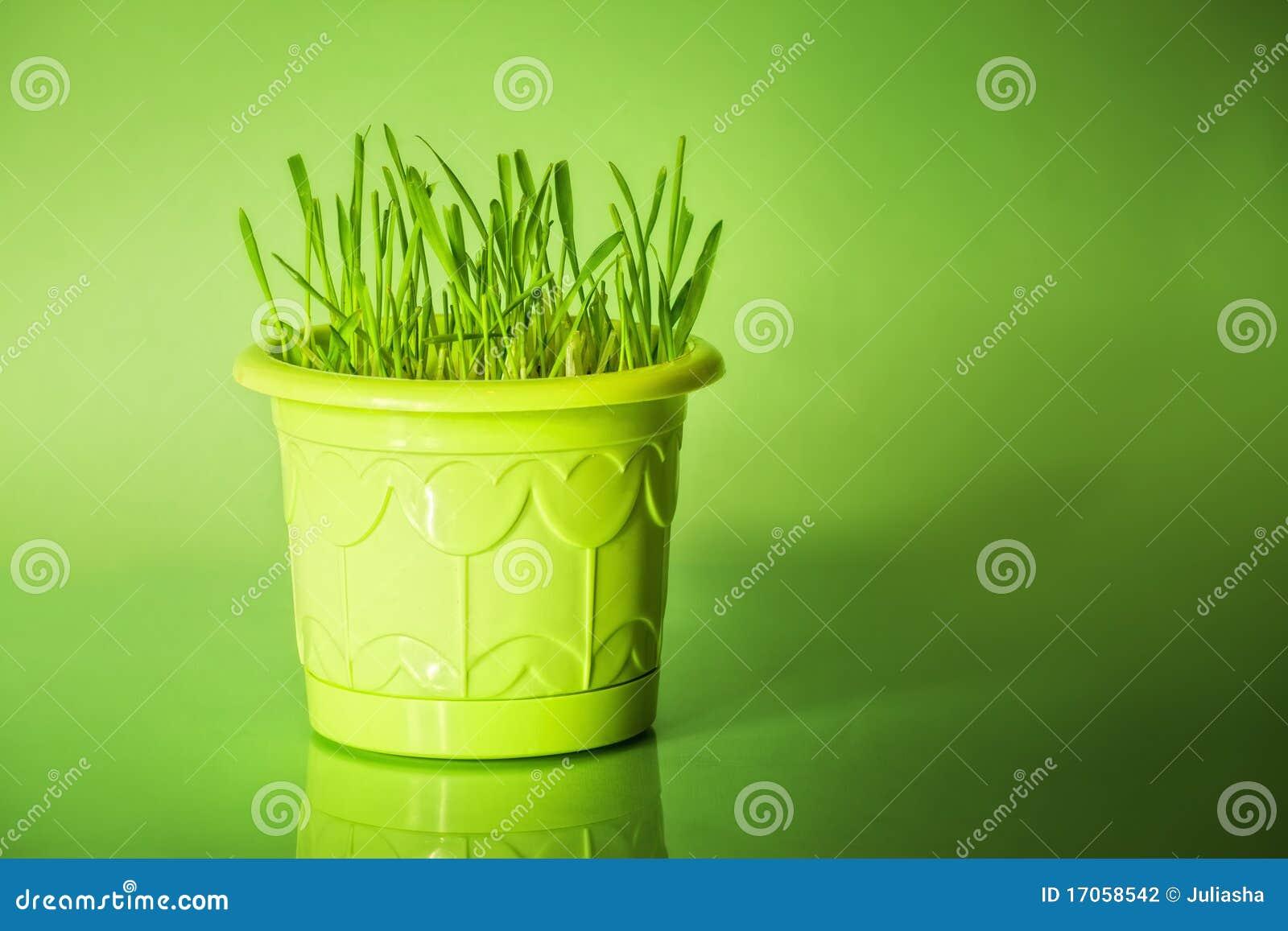 Flowerpot χλόη πράσινη