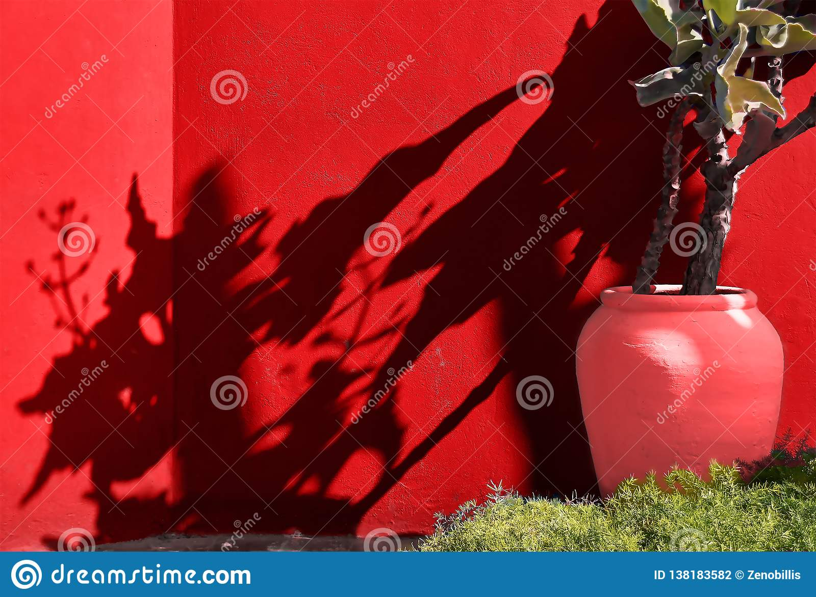 Flowerpot with tropical plant on the background of bright wall