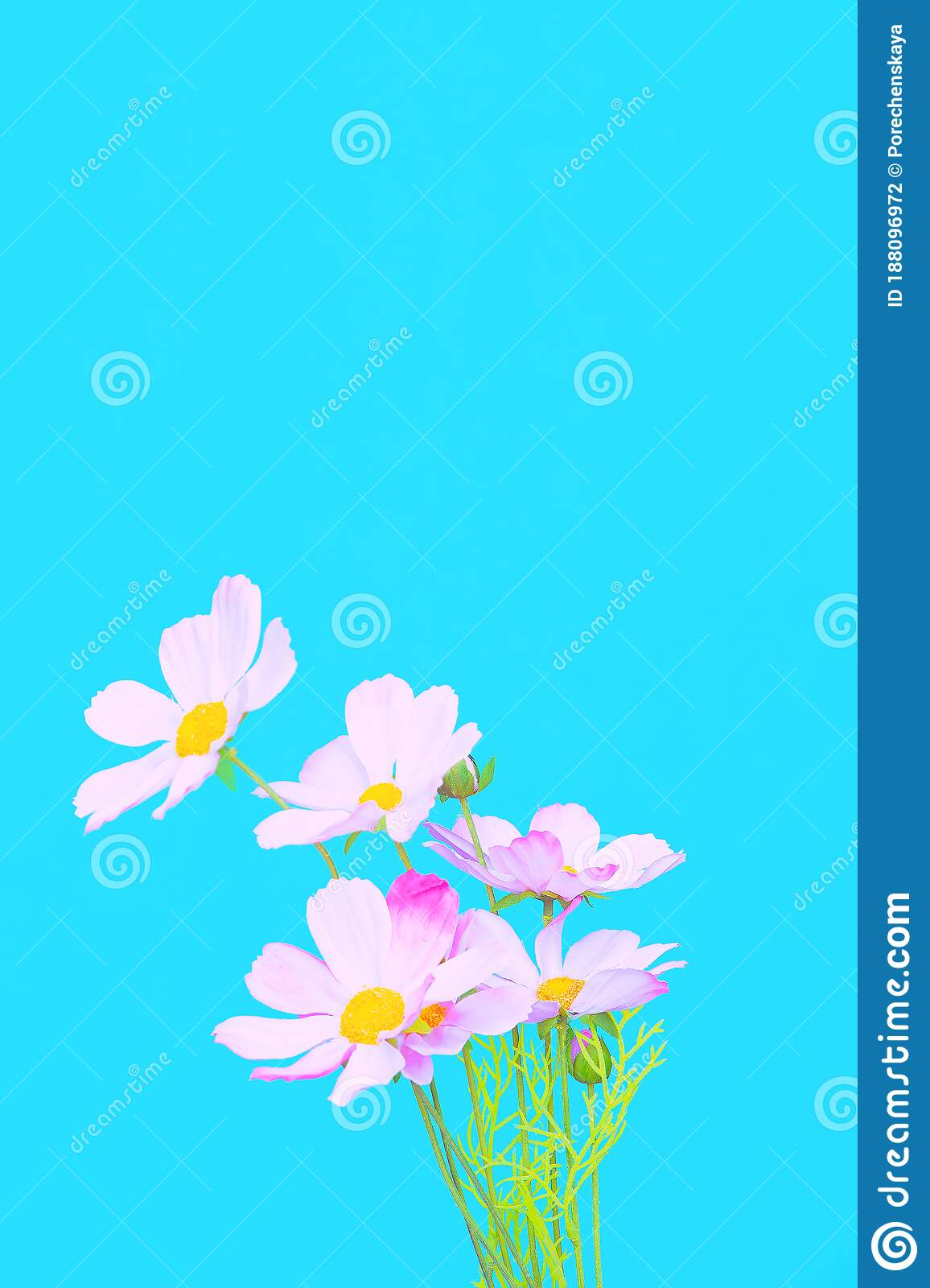 Flowers Aesthetic Wallpaper Blue Colours Trends Stock Photo Image Of Aesthetic Creative 188096972