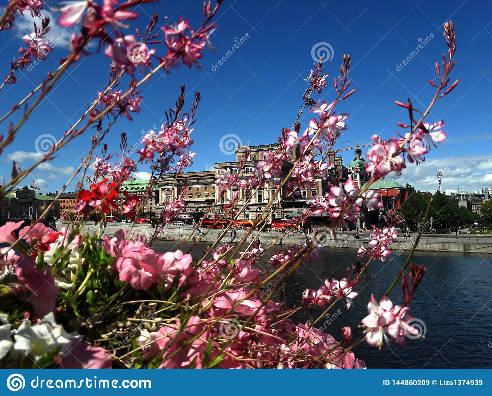 Flowers against the lake and the city, Stockholm background.