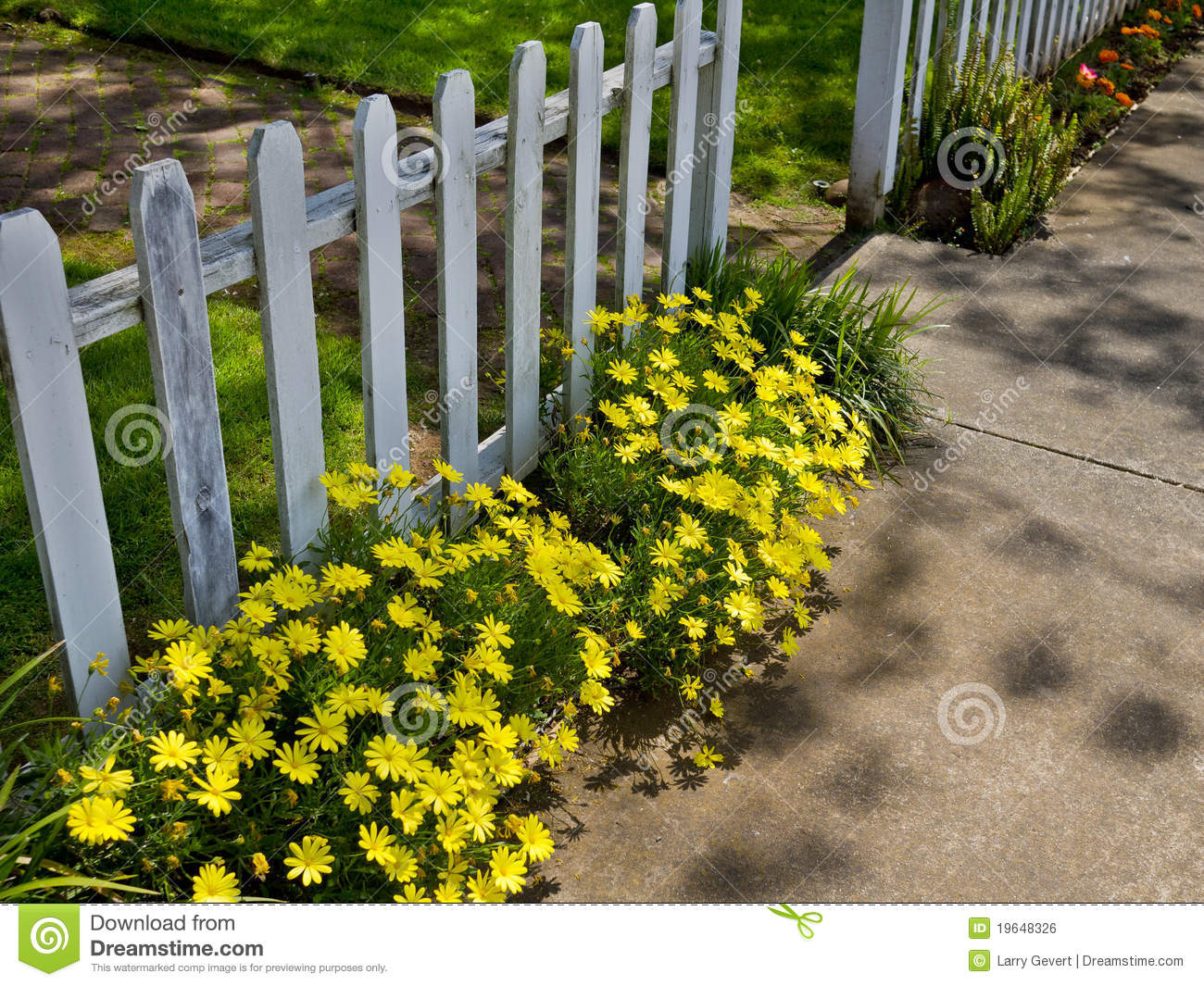 flowers along the sidewalk stock photo image of flower 19648326