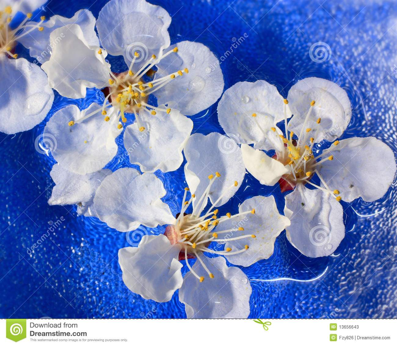Flowers of apricot floating in water stock image image for Floating flowers in water