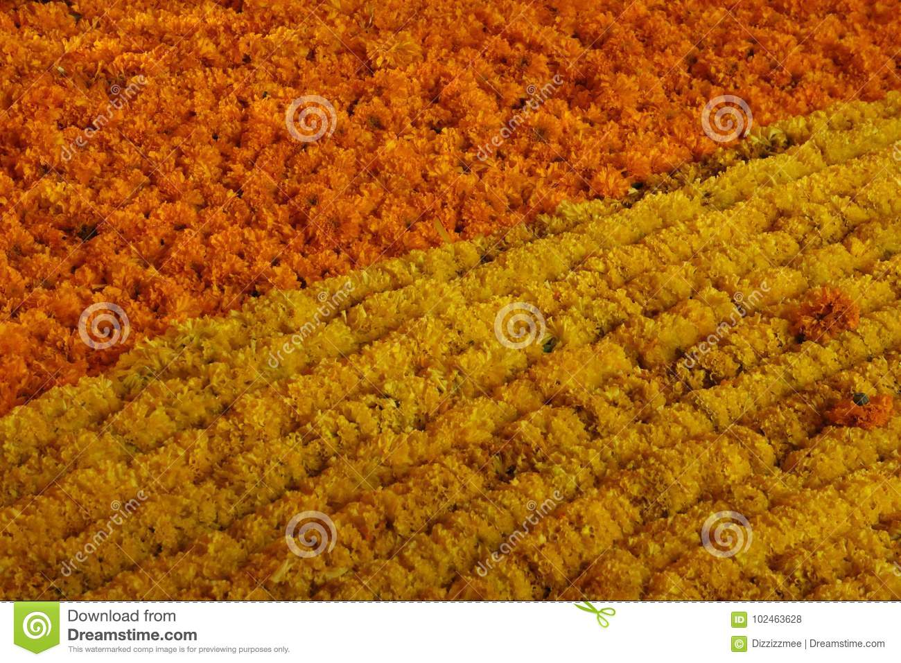 Flower Curtains Made From Yellow Marigold For Decoration Stock Photo