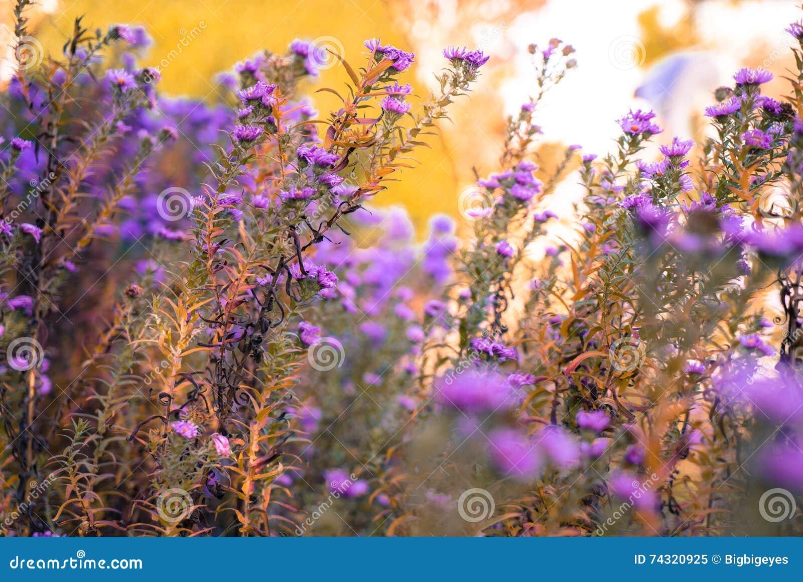 Flowers in autumn meadow