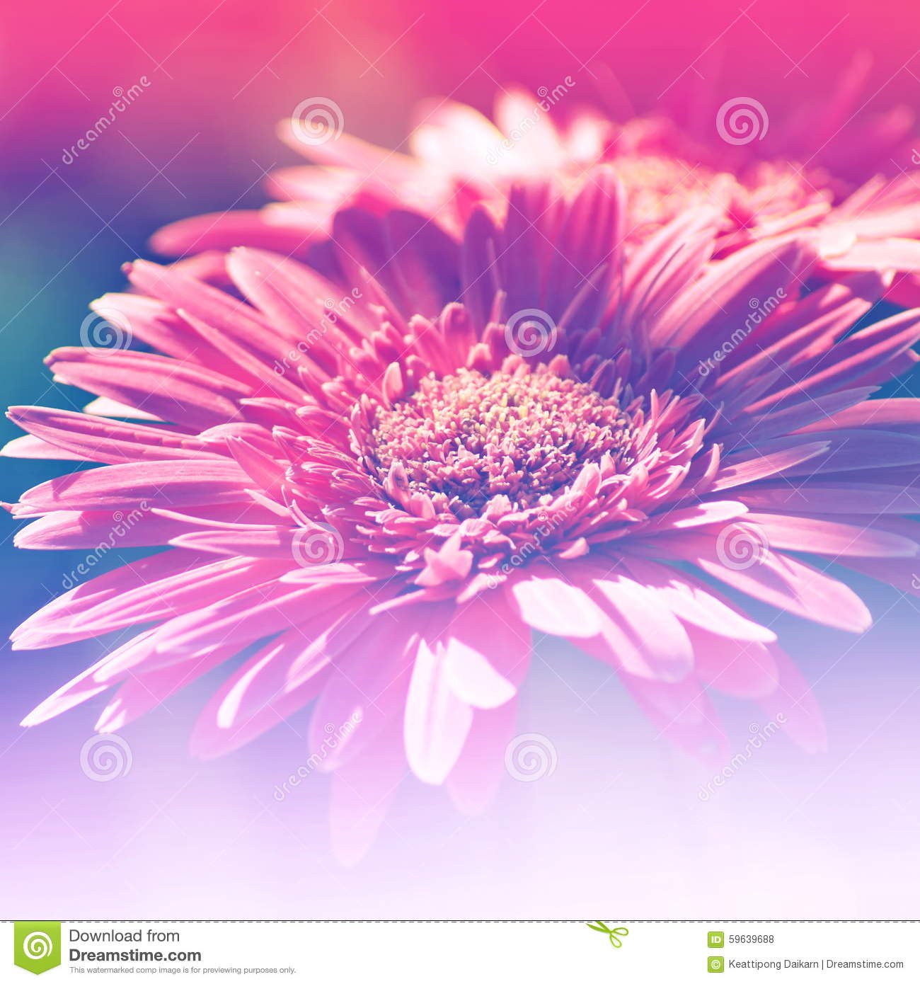 Flowers Background Bright Field Effect Stock Photo