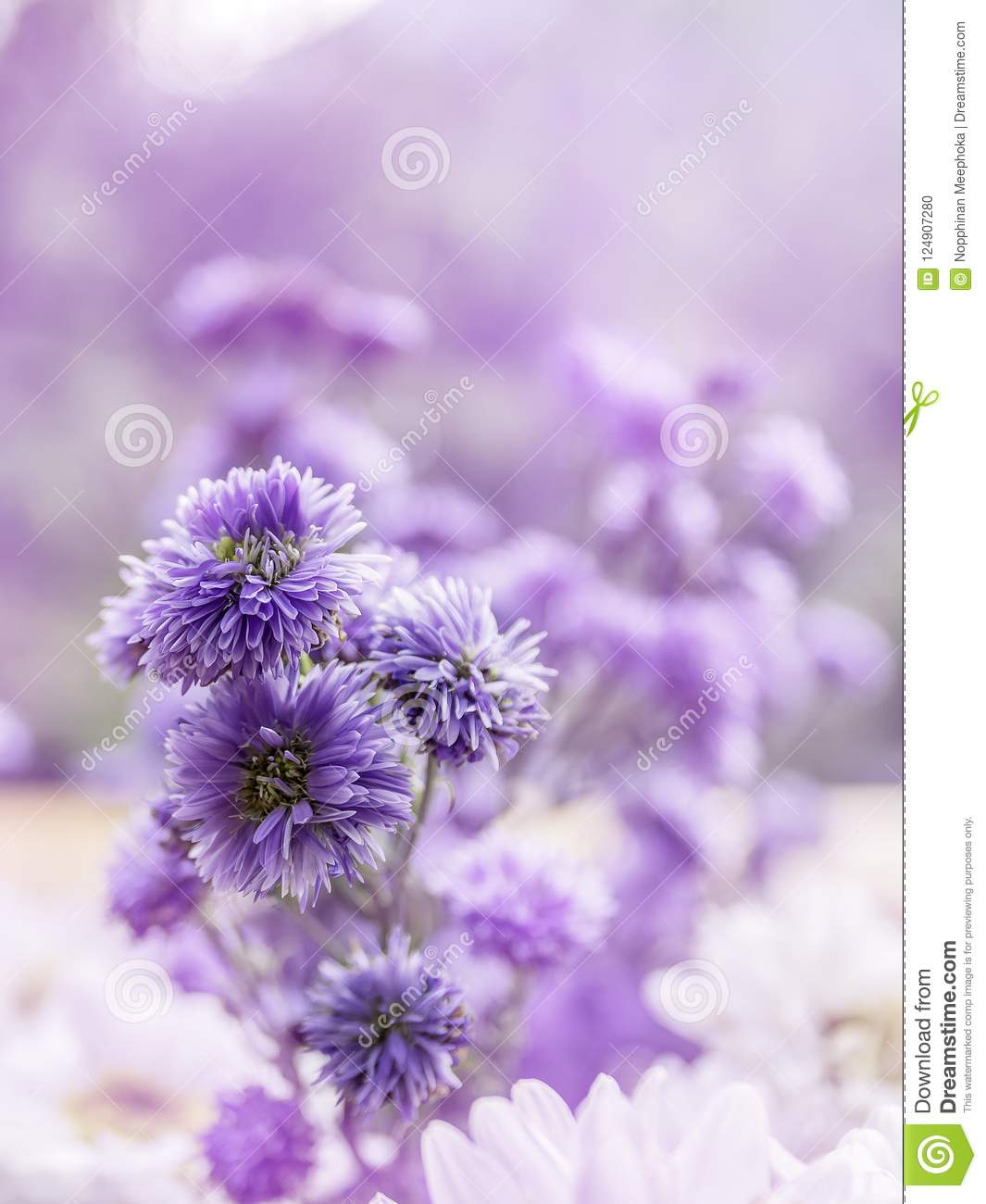 Flowers backgroundcloseup beautiful purple flowers in nature stock download flowers backgroundcloseup beautiful purple flowers in nature stock photo image of izmirmasajfo