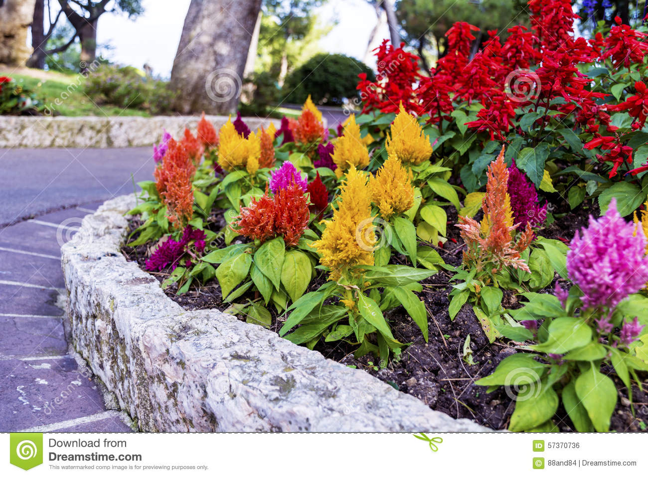 Royalty Free Stock Photo. Download Flowers In The Beautiful ,exotic Garden  ...