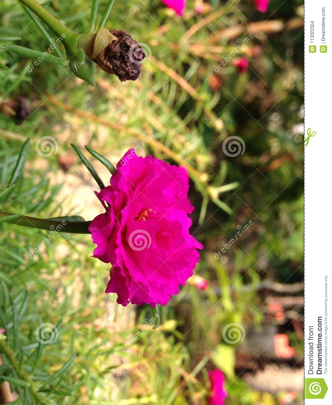 Flowers Love Stock Photo Image Of Flowers Beautiful 113022354
