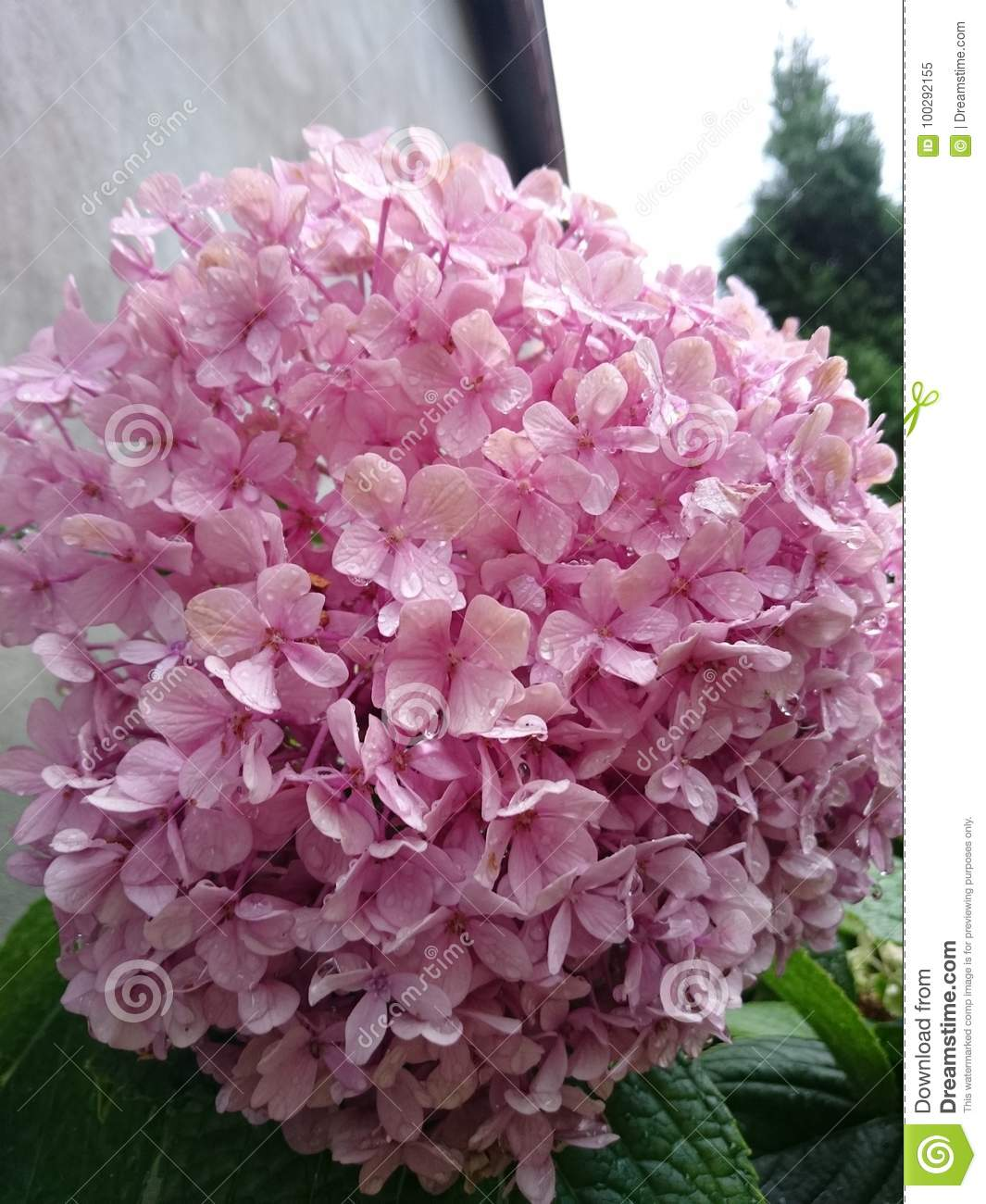Flowers Stock Image Image Of Nature Beautiful Which 100292155