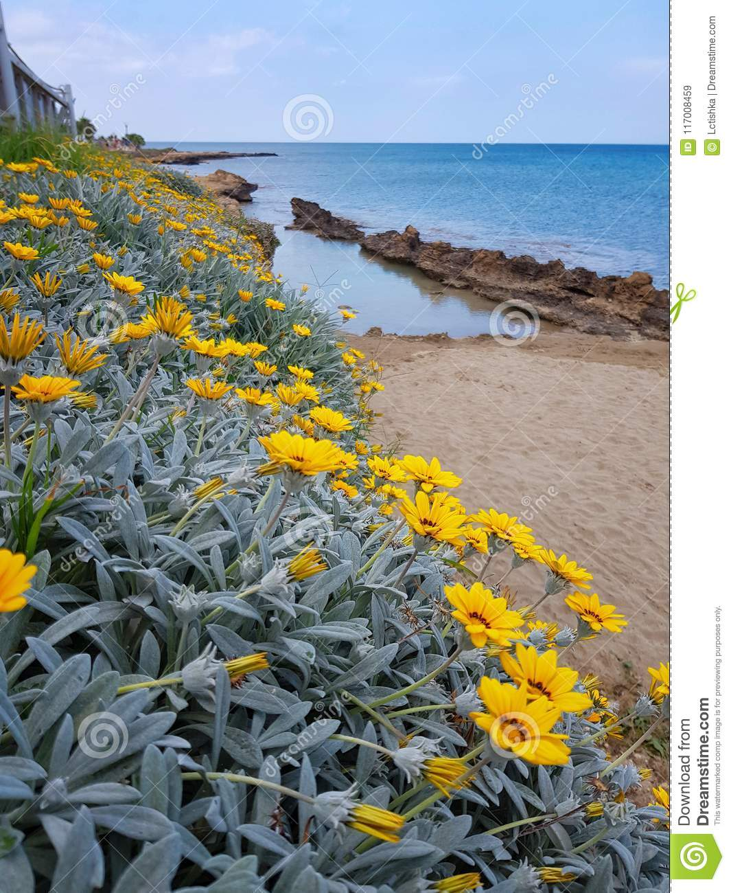 Yellow Flowers Grow On The Shores Of The Mediterranean Sea Stock