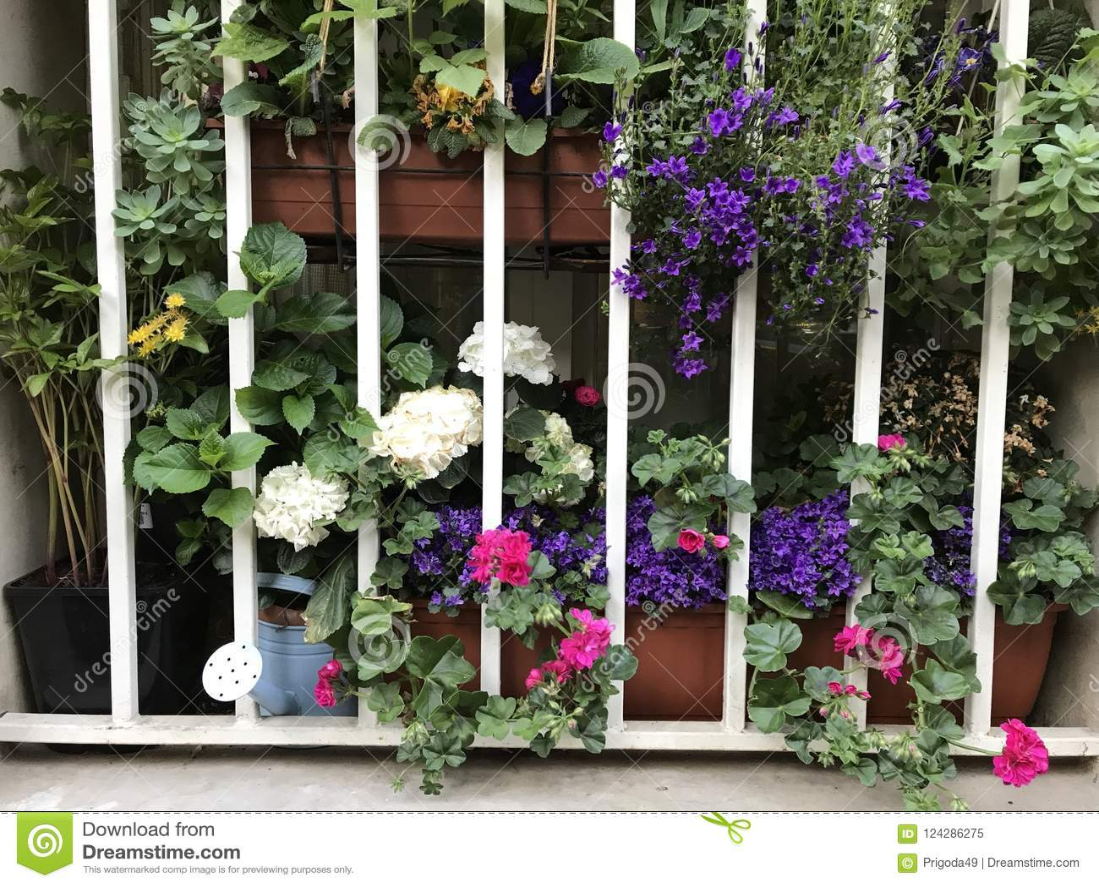 Flowers behind the grid stock image image of purple 124286275 download flowers behind the grid stock image image of purple 124286275 izmirmasajfo