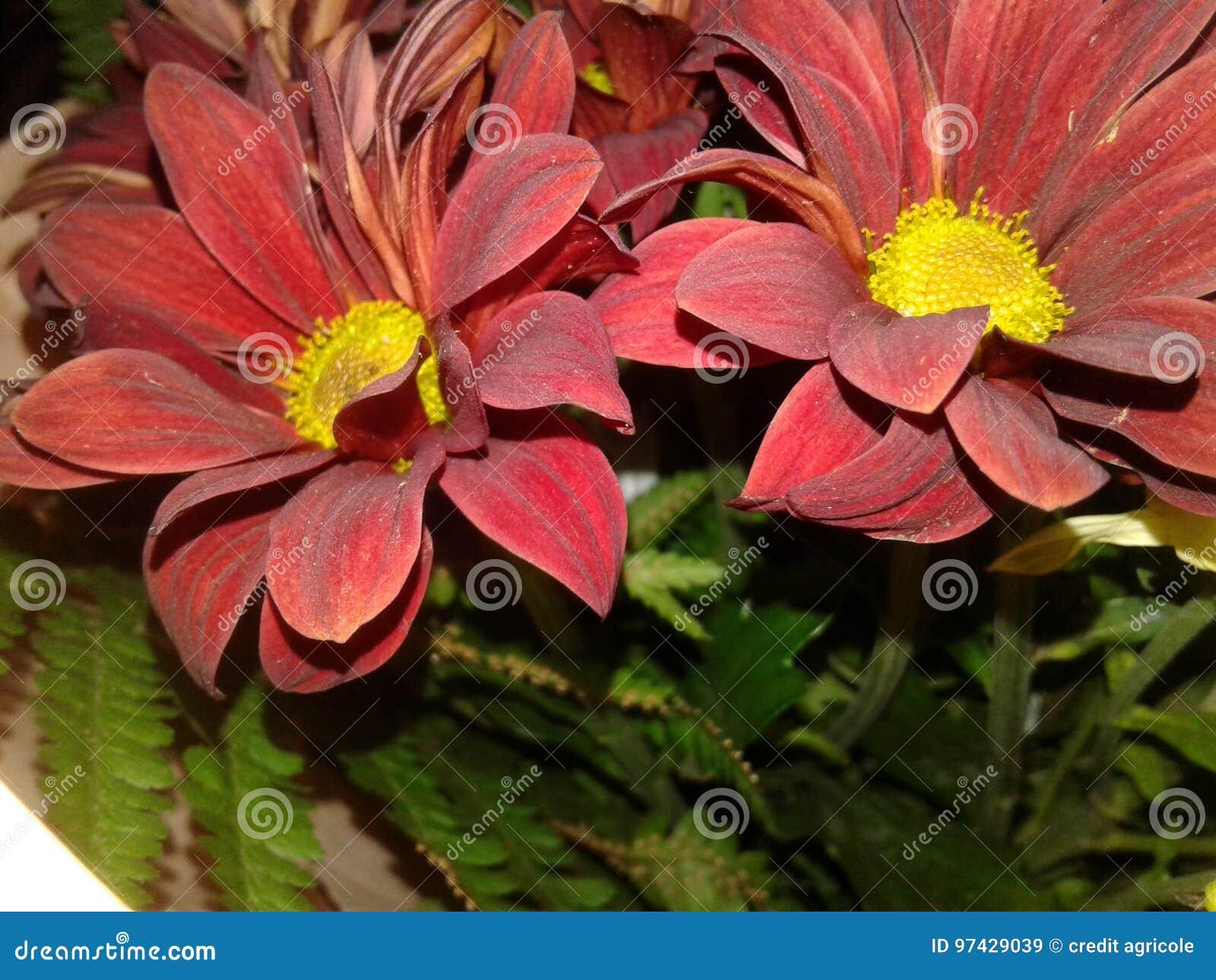 Flowers stock image image of plants bouquet light 97429039 royalty free stock photo izmirmasajfo Images
