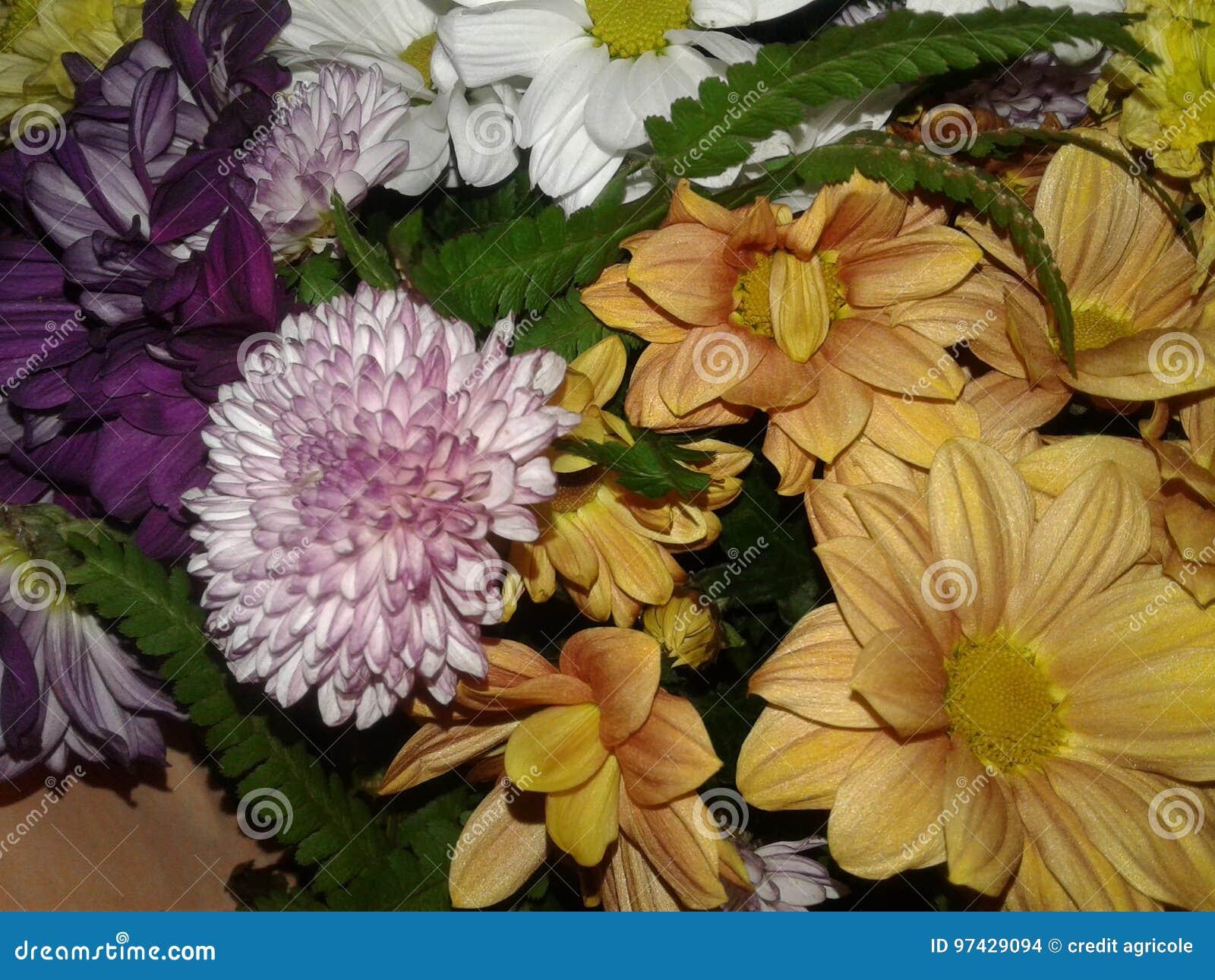 Flowers stock photo image of plants beautiful conquered 97429094 download flowers stock photo image of plants beautiful conquered 97429094 izmirmasajfo
