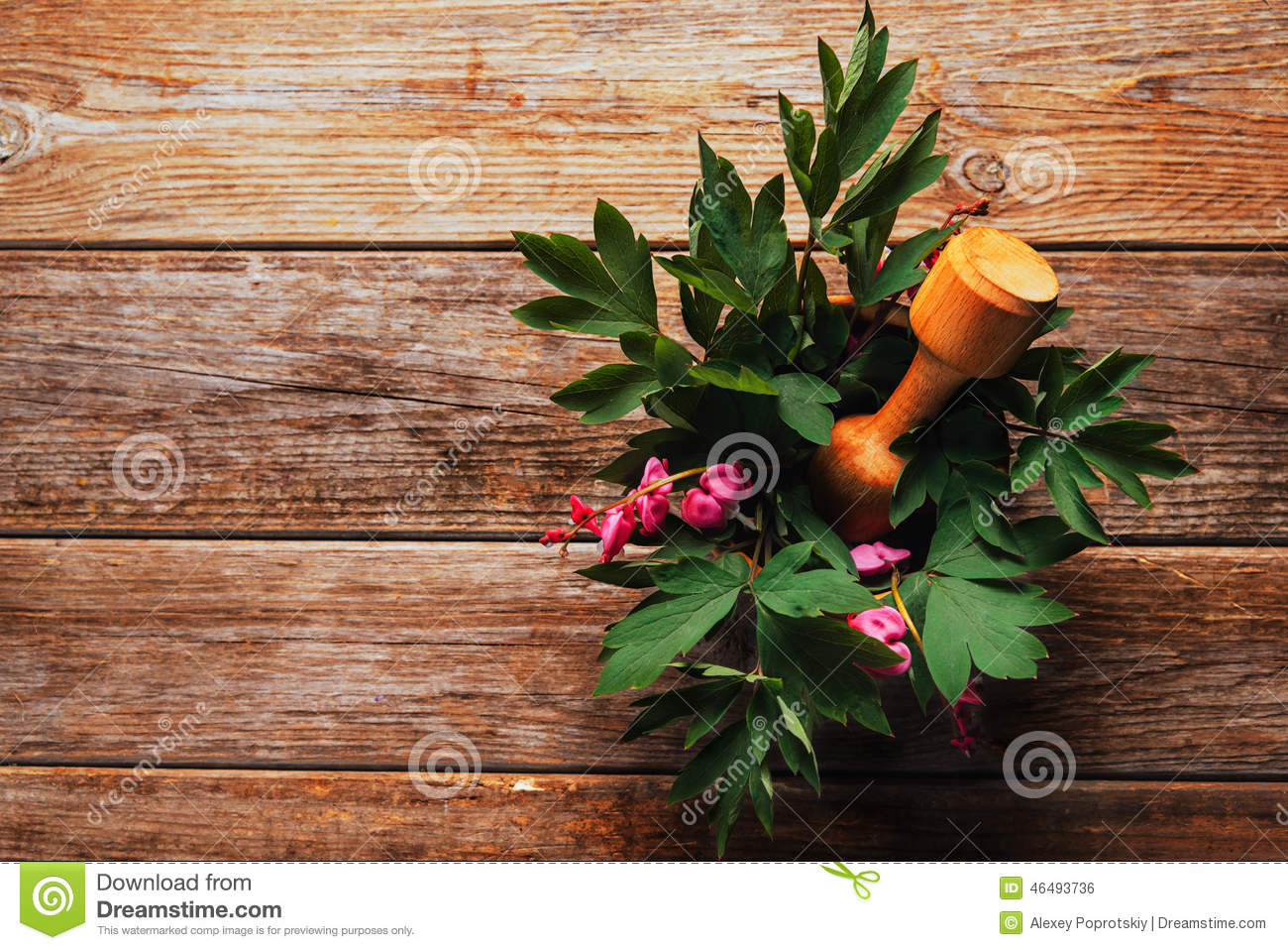 Flowers Bleeding Heart In Mortar With Pestle Stock Photo - Image of ...