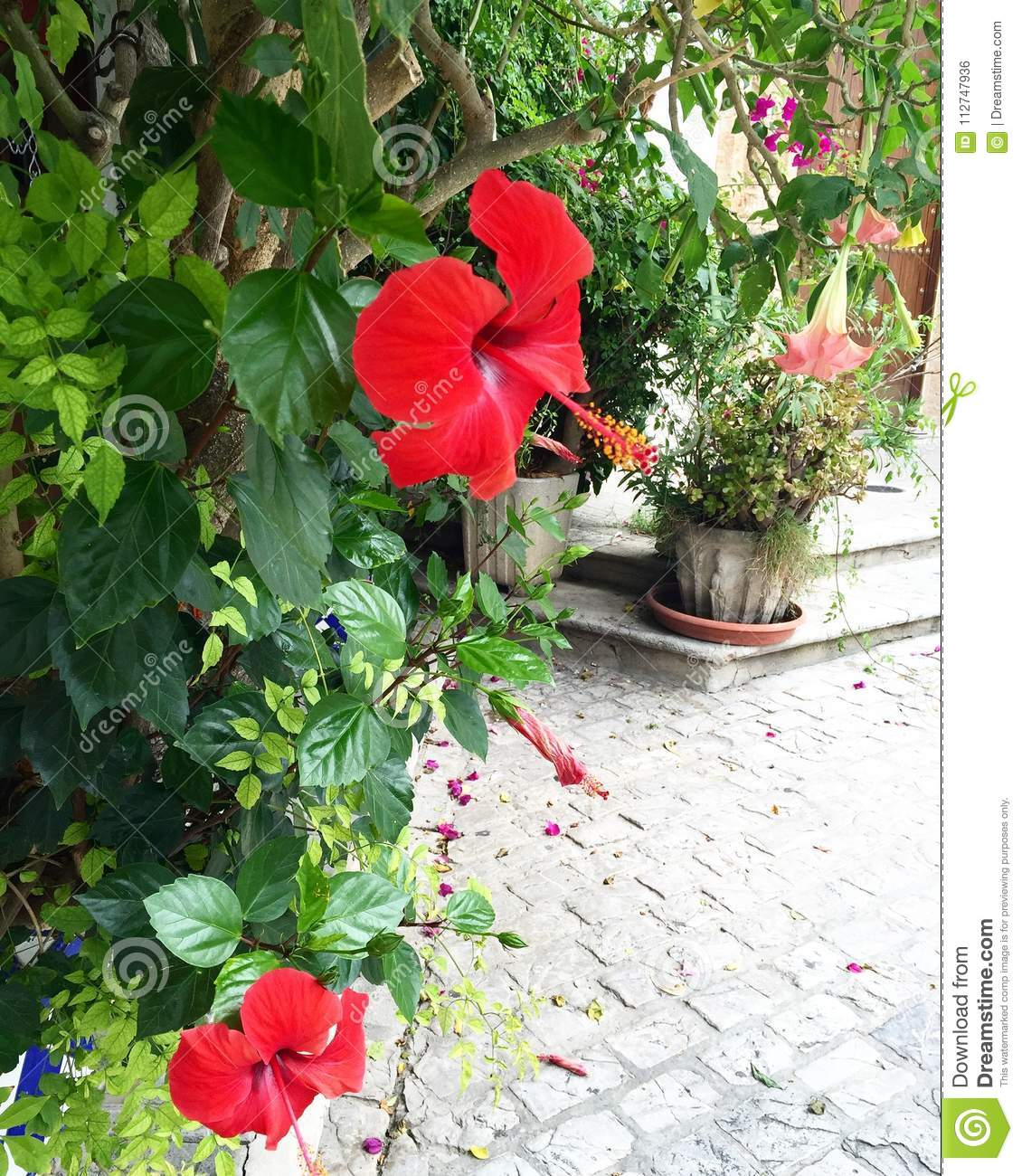 Flowers bloom on spring red flowers and nature style stock photo download flowers bloom on spring red flowers and nature style stock photo image of mightylinksfo