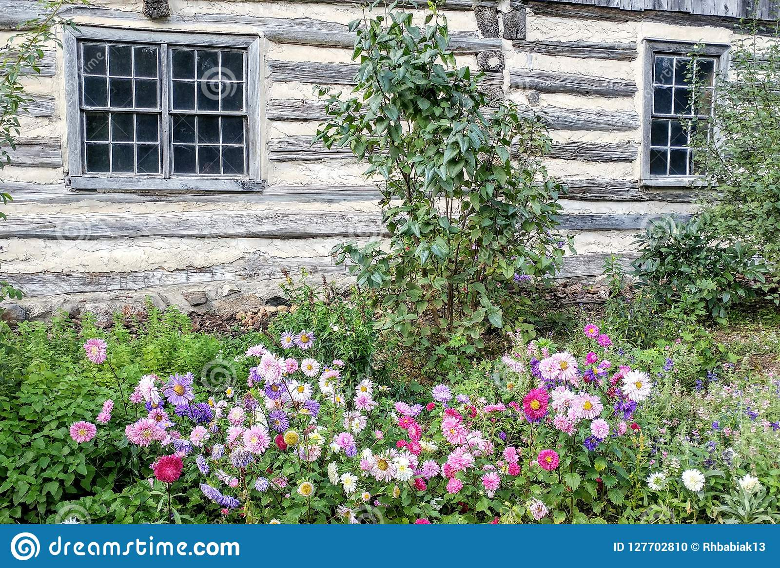 9153f21efa4e Flowers Blooming By Old Fashioned Log Home Stock Photo - Image of ...