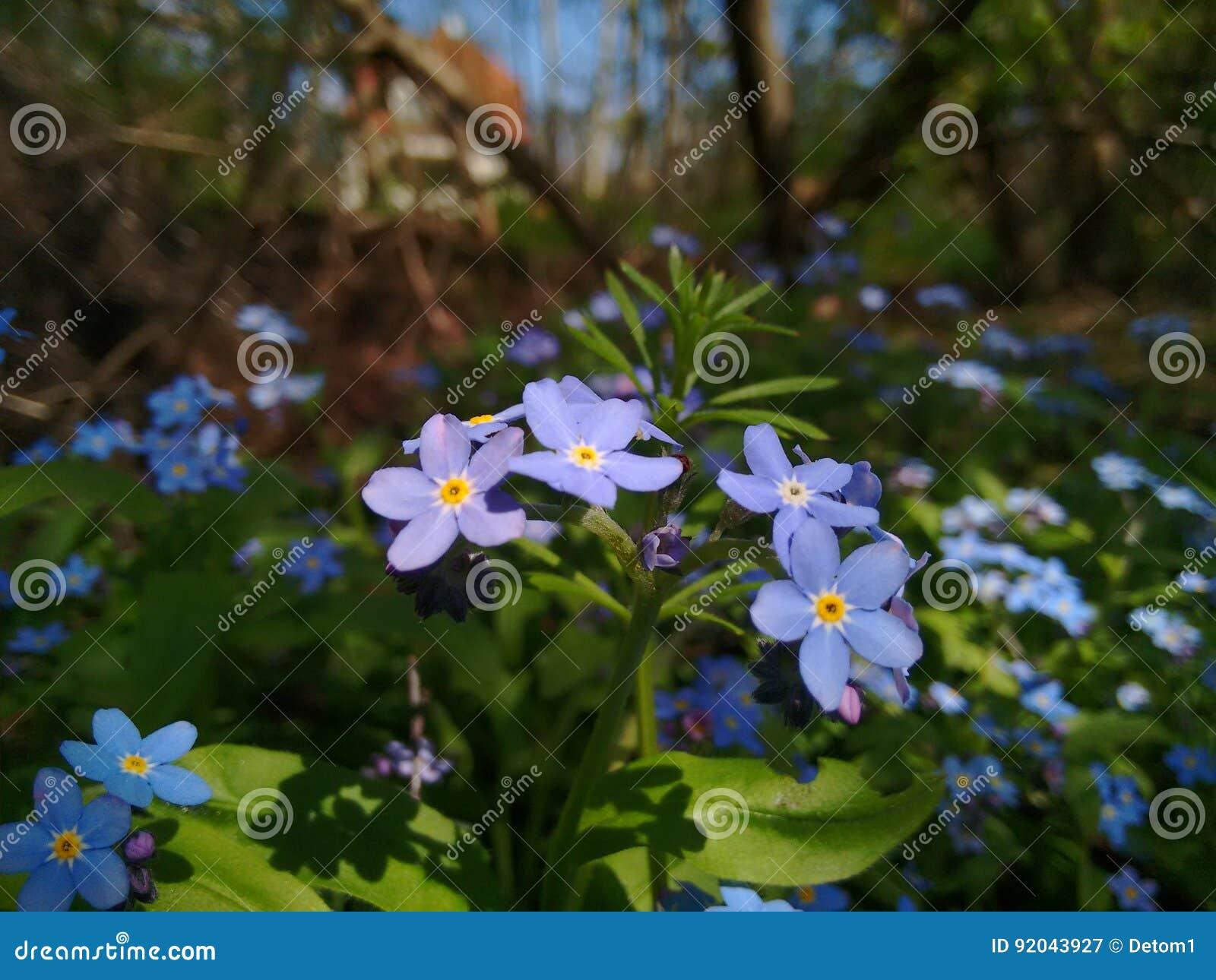 flowers blue in the garden - Wilde Garden