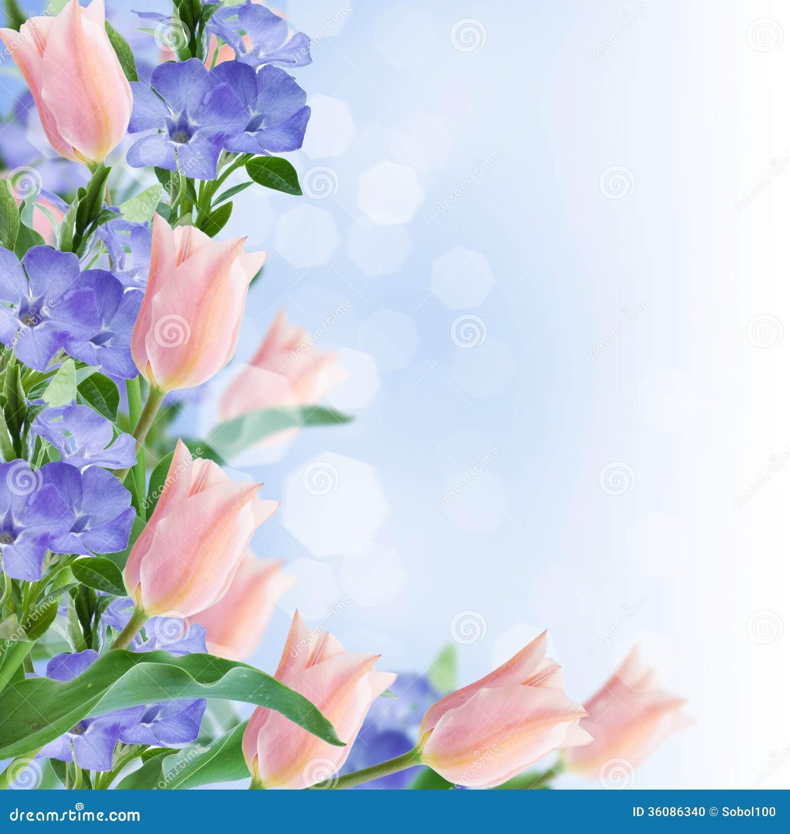 Flowers Border On Pink Background Stock Photo - Image ...