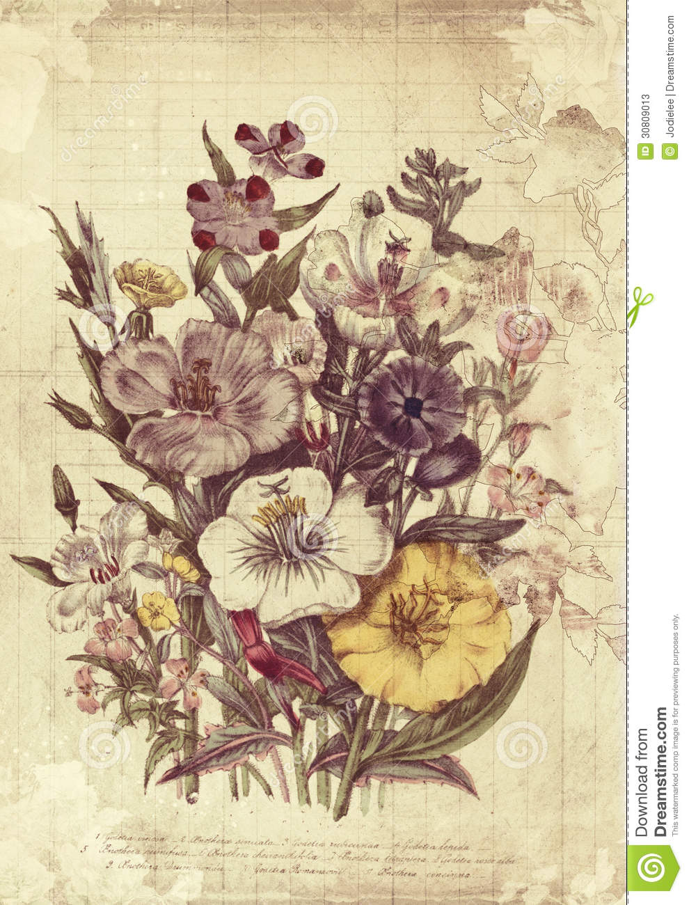 Flowers botanical vintage style wall art with textured background