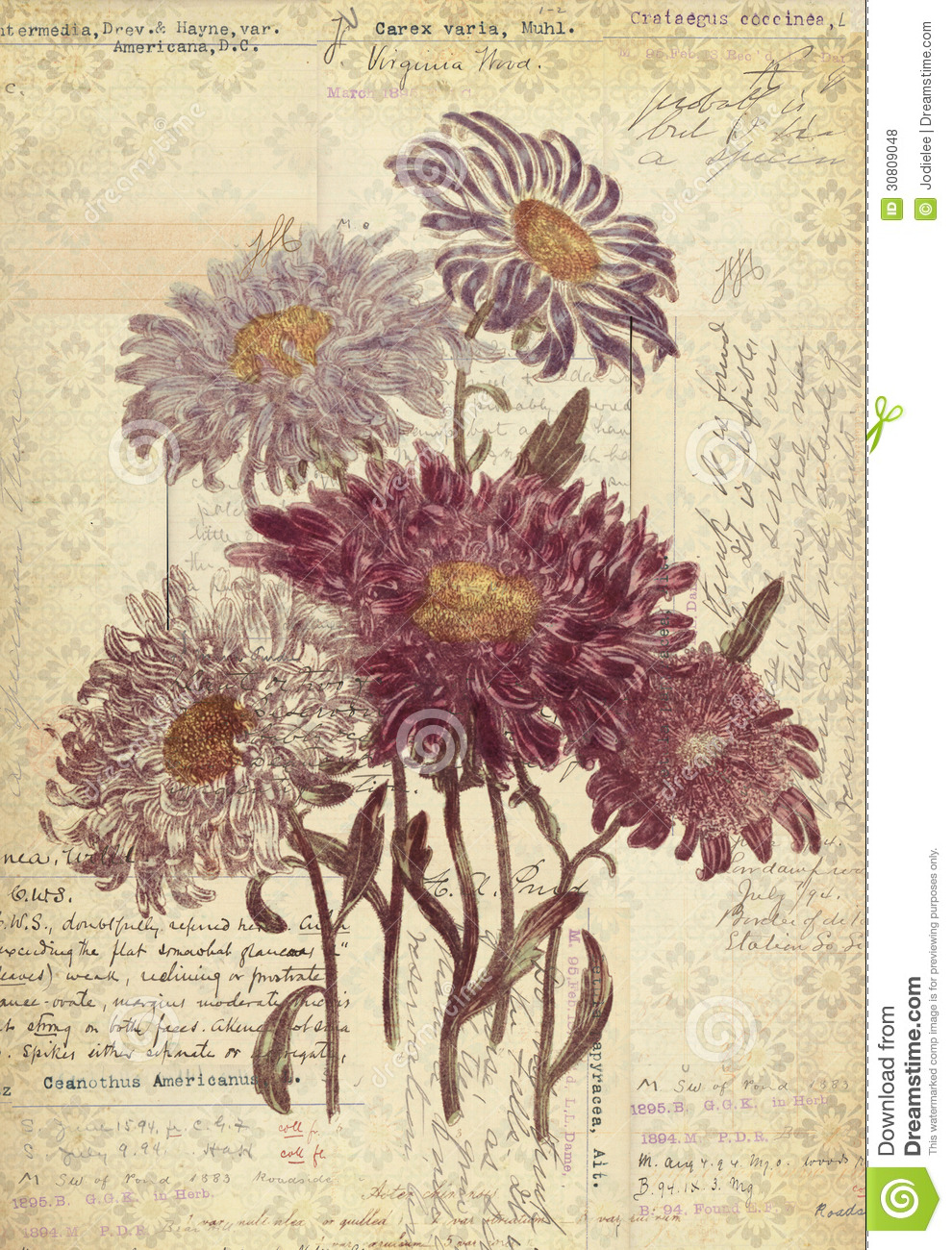 Vintage Wall Art flowers botanical vintage style wall art with textured background